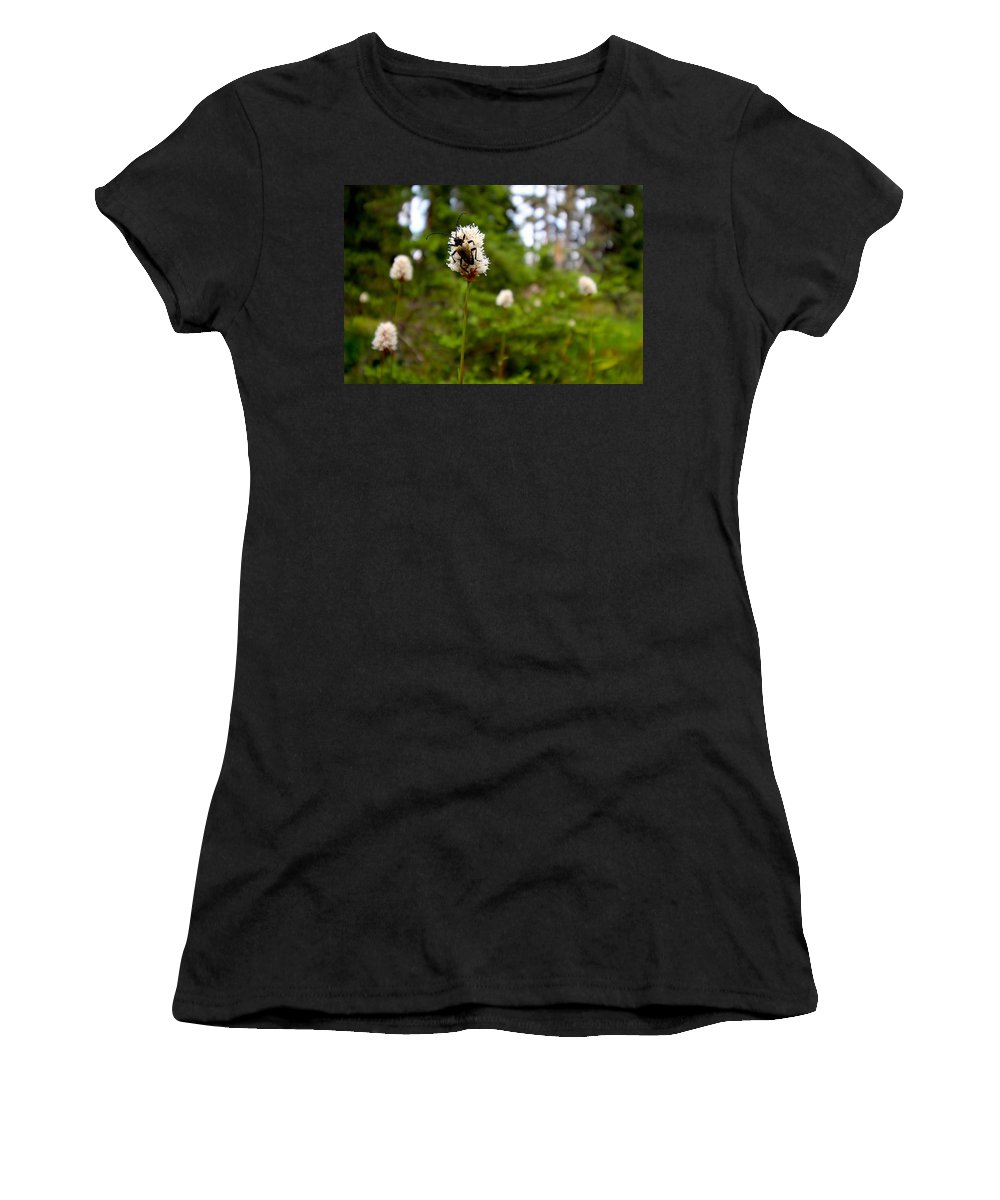 Adventure Women's T-Shirt featuring the photograph Brown Spruce Longhorn Beetle by Nicholas Miller
