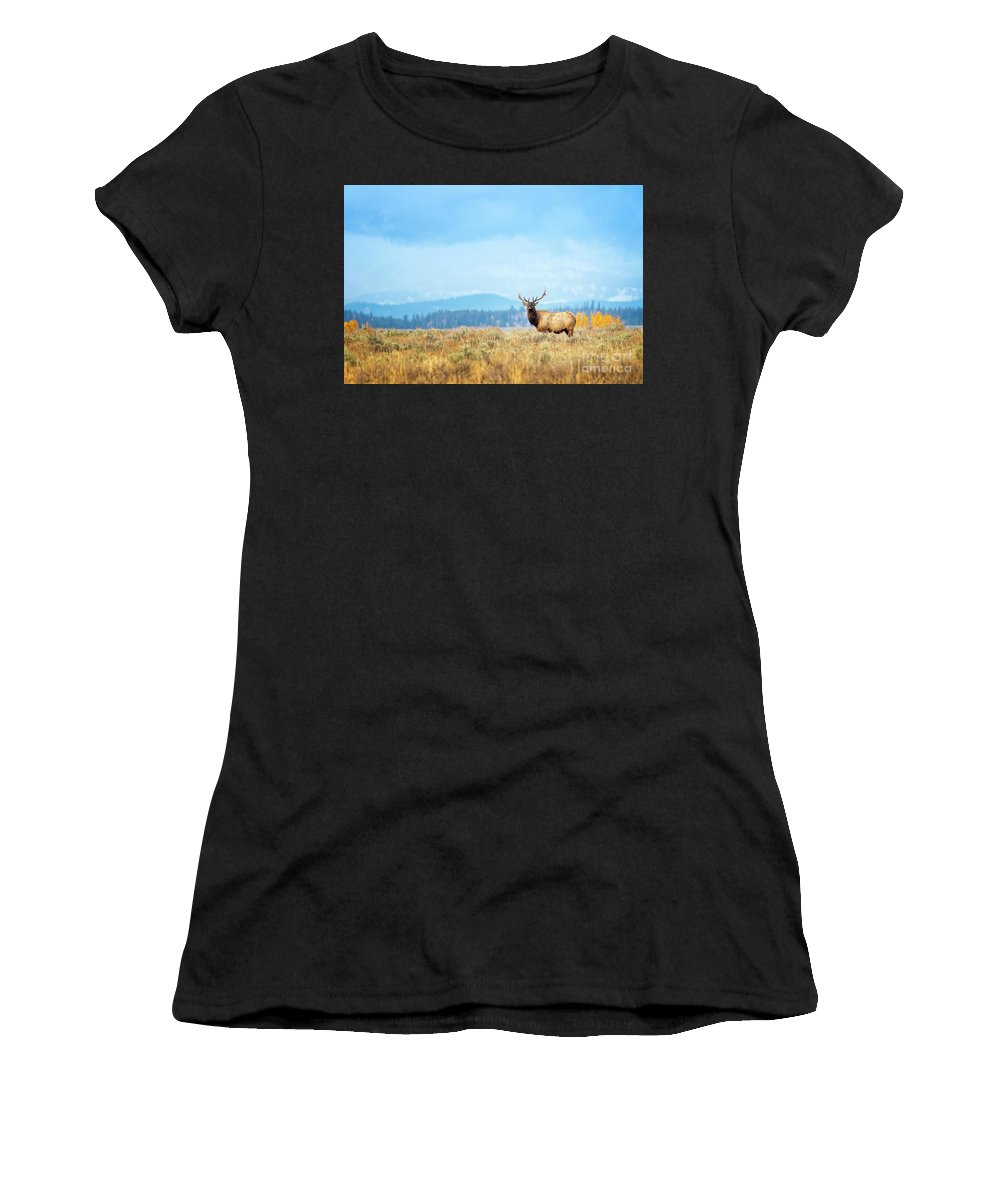 Bull Elk Women's T-Shirt (Athletic Fit) featuring the photograph Bull Elk Meadow by Todd Bielby