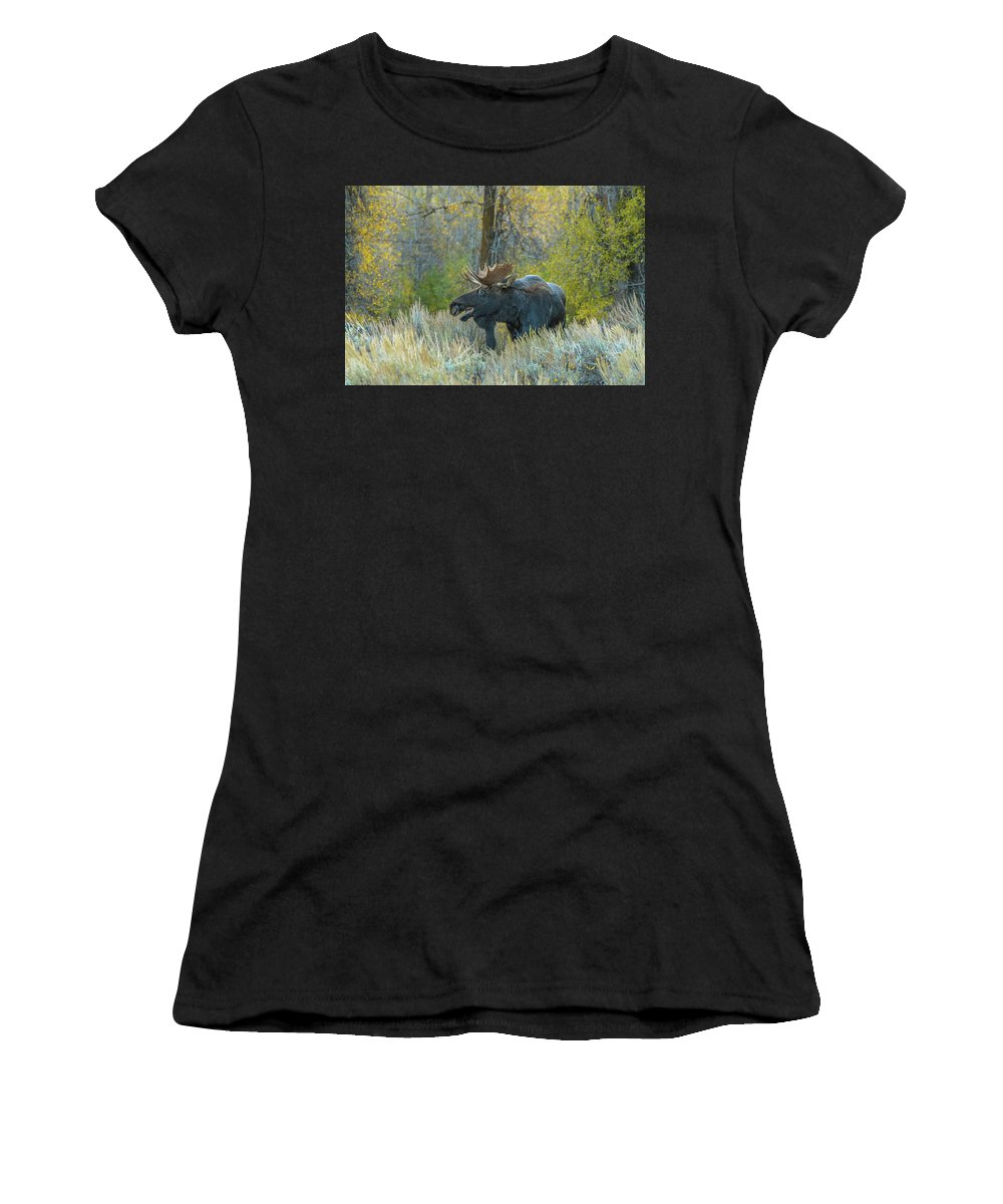 Evening Women's T-Shirt (Athletic Fit) featuring the photograph Bull Moose In The Evening by Yeates Photography