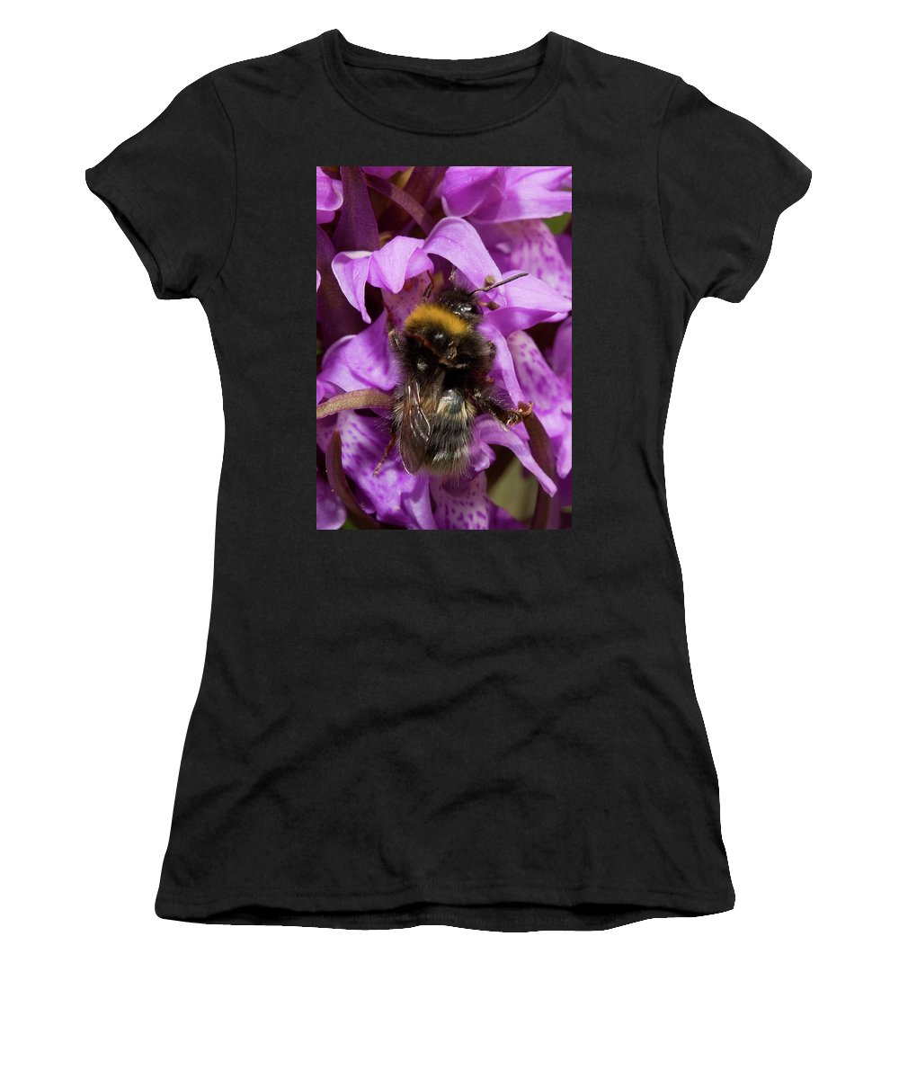 Plants Women's T-Shirt (Athletic Fit) featuring the photograph Bumblebee On Orchid by Bob Kemp