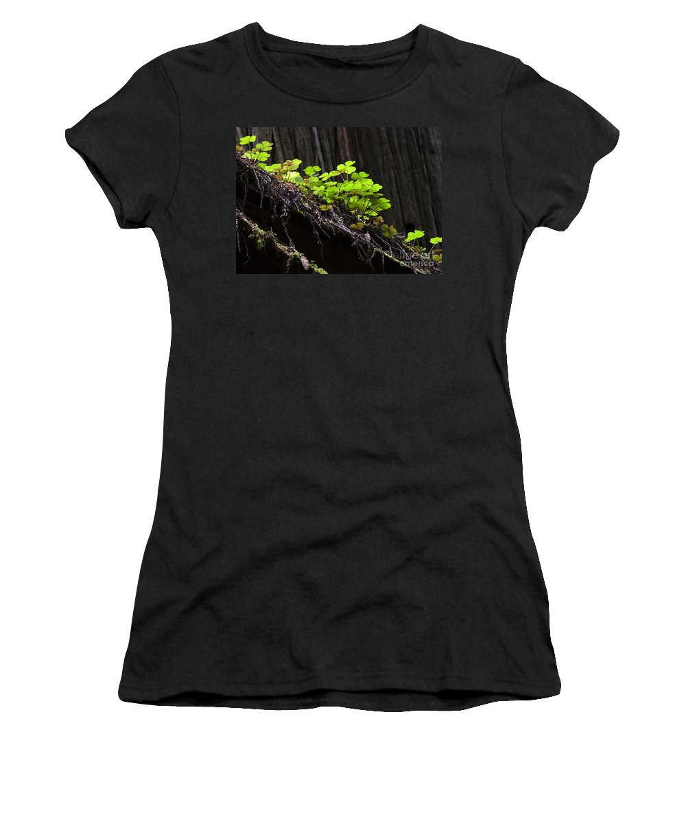 Redwood Women's T-Shirt featuring the photograph California Redwoods 4 by Bob Christopher