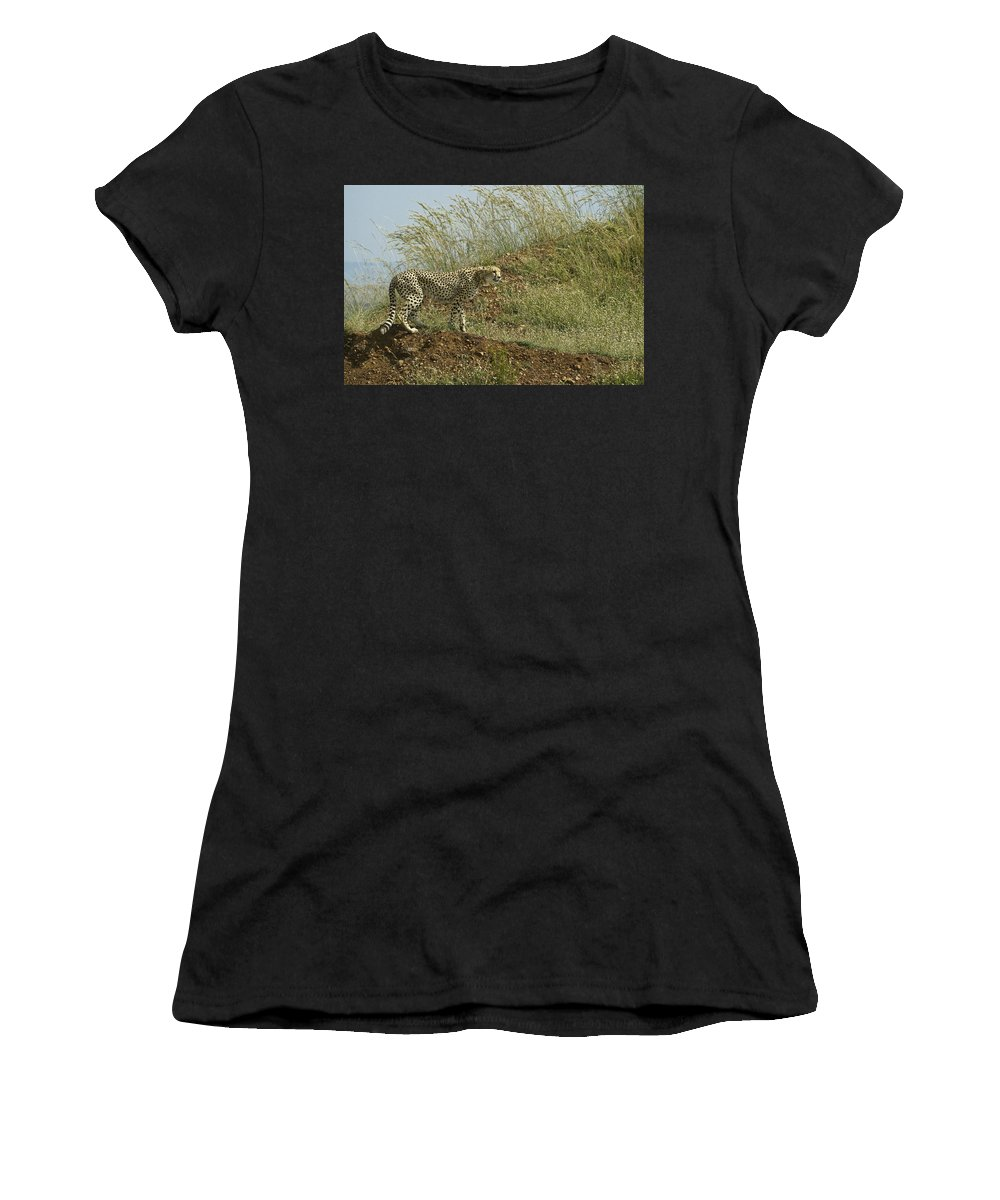 Africa Women's T-Shirt (Athletic Fit) featuring the photograph Cheetah On The Prowl by Michele Burgess