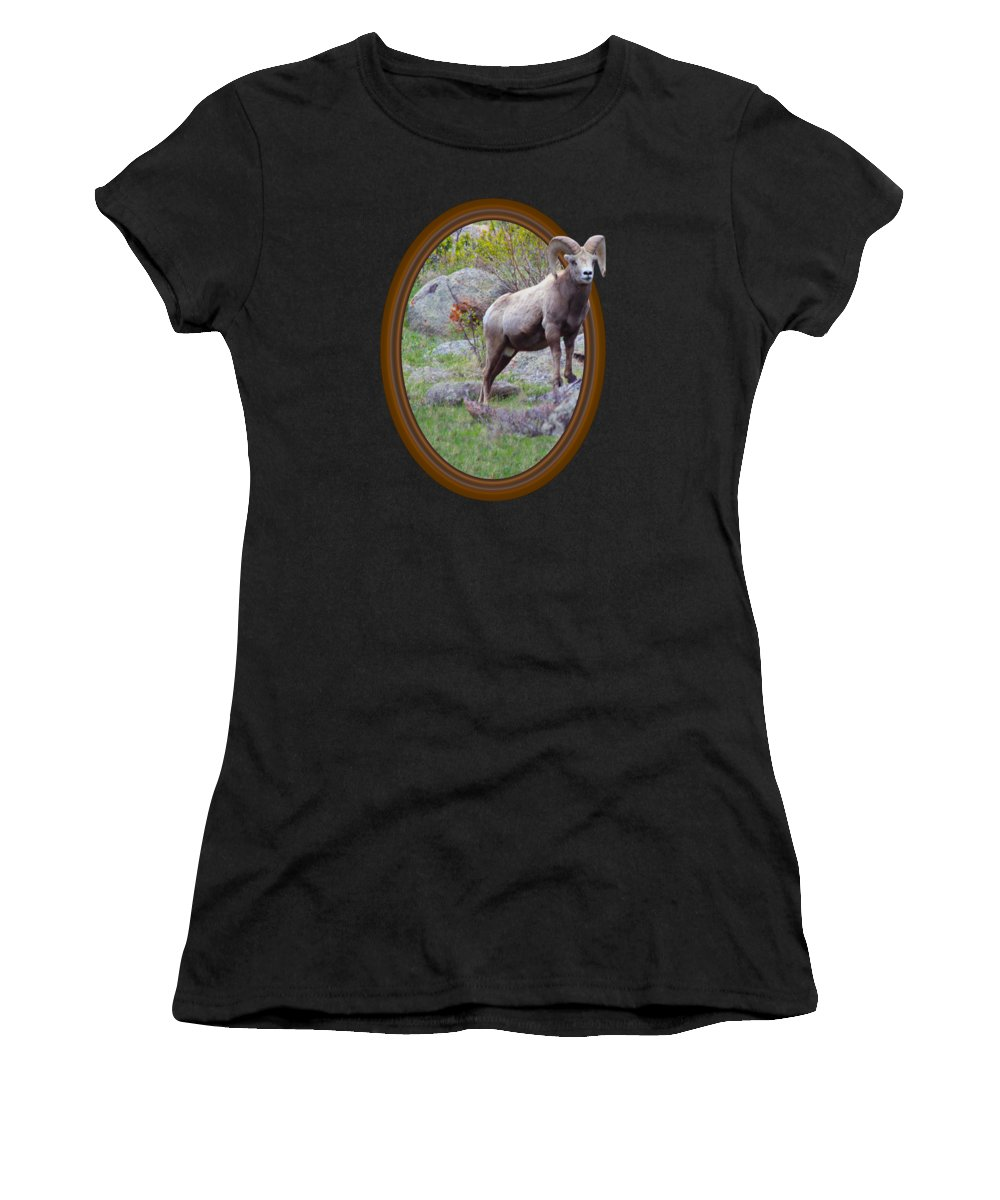 Rocky Mountain Bighorn Sheep Women's T-Shirts