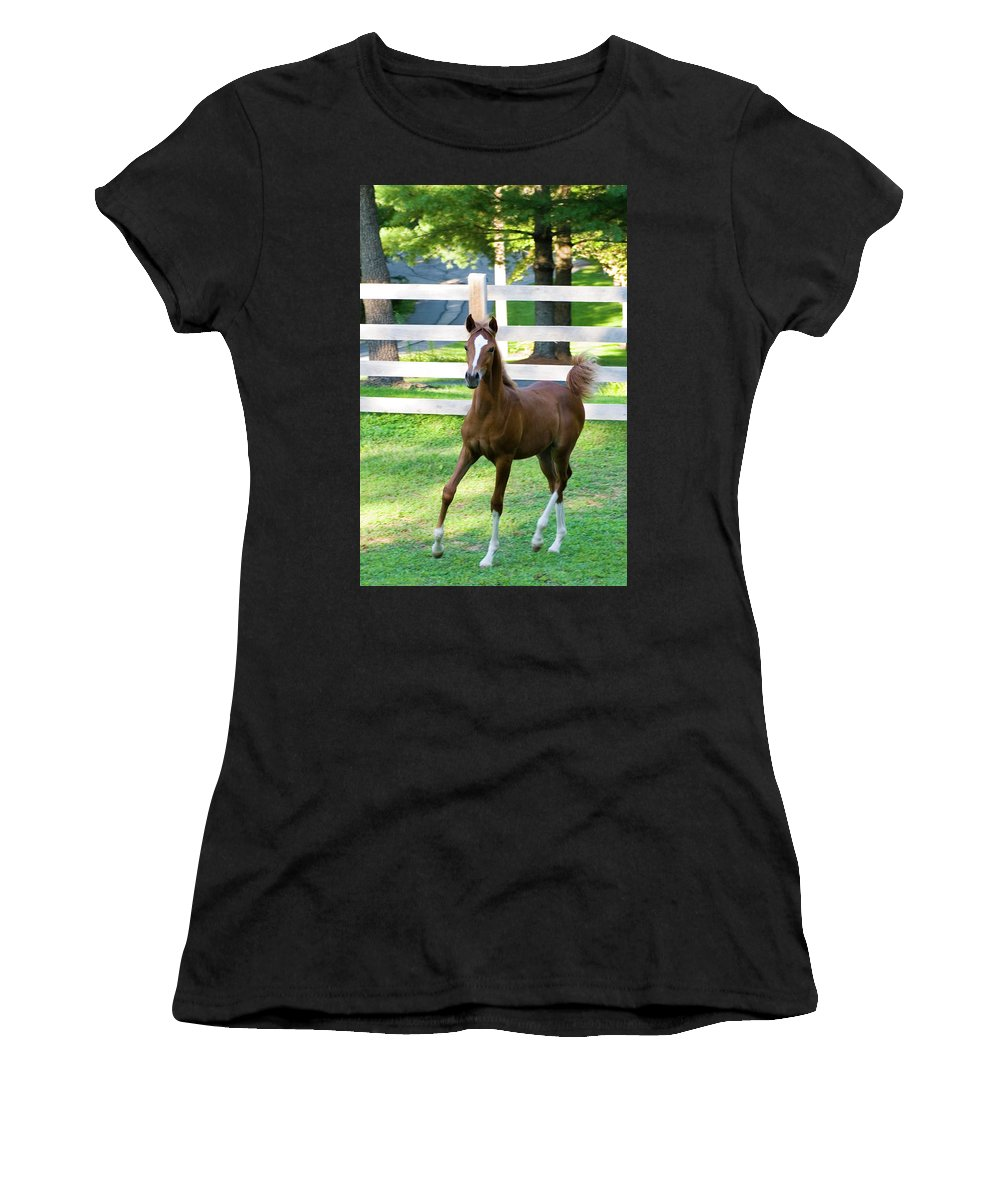 Horse Women's T-Shirt (Athletic Fit) featuring the photograph Colt by Michael Barry