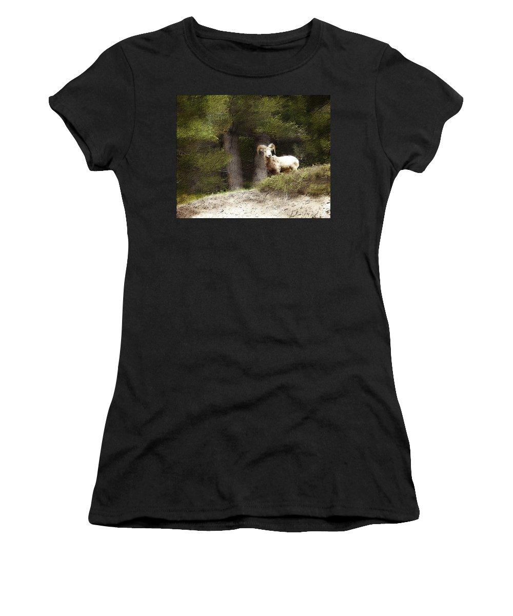 Wildlife Women's T-Shirt (Athletic Fit) featuring the photograph Curiosity by Jo-Anne Gazo-McKim