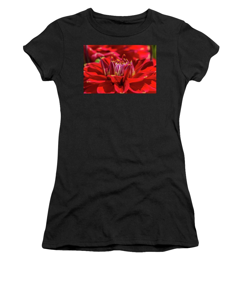 Dahlia Women's T-Shirt (Athletic Fit) featuring the photograph Dahlia Study 1 by Scott Campbell