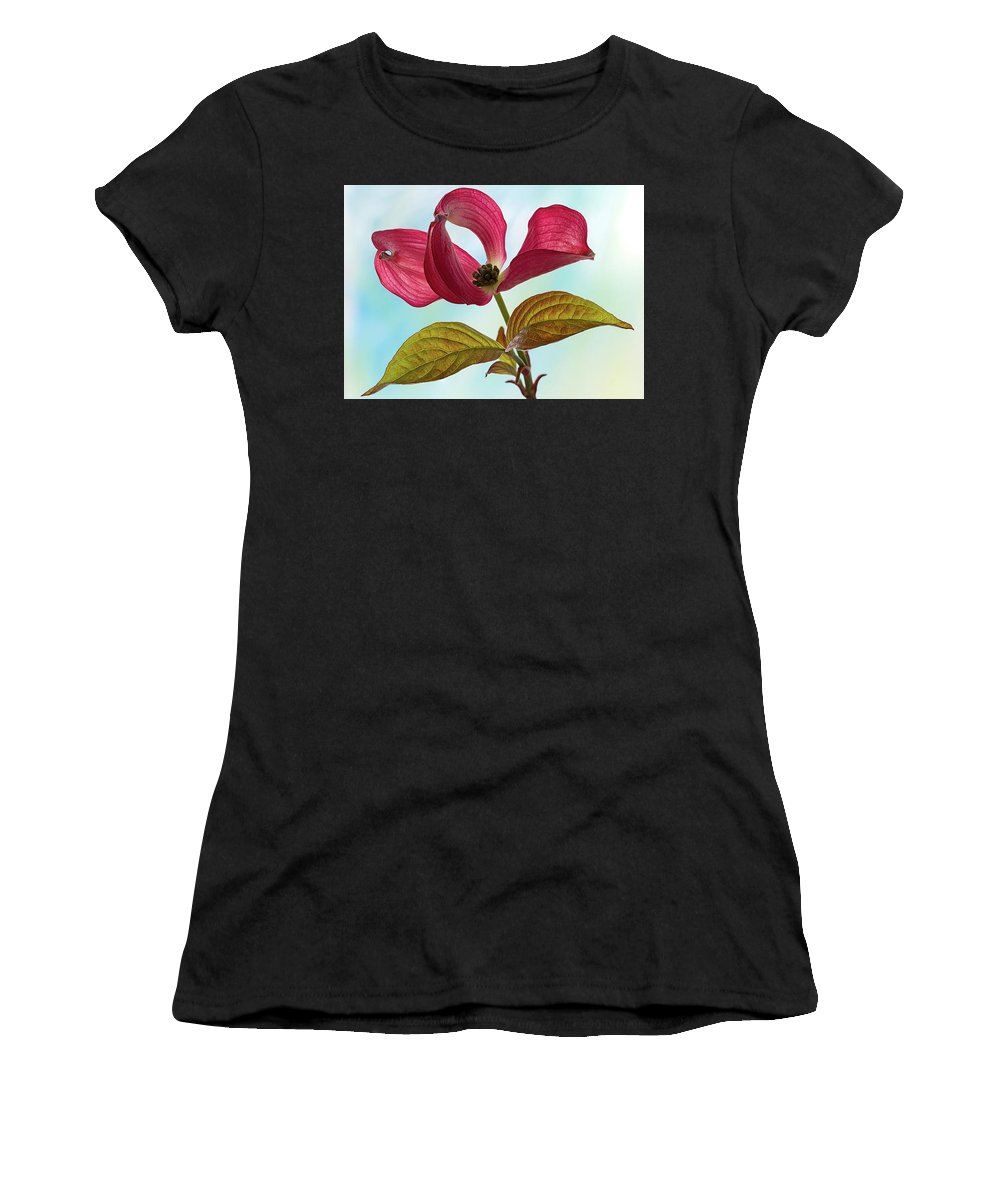 Floral Women's T-Shirt featuring the photograph Dogwood Ballet 4 by Shirley Mitchell