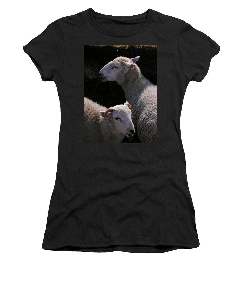 Sheep Women's T-Shirt (Athletic Fit) featuring the photograph Double Portrait by Harry Robertson
