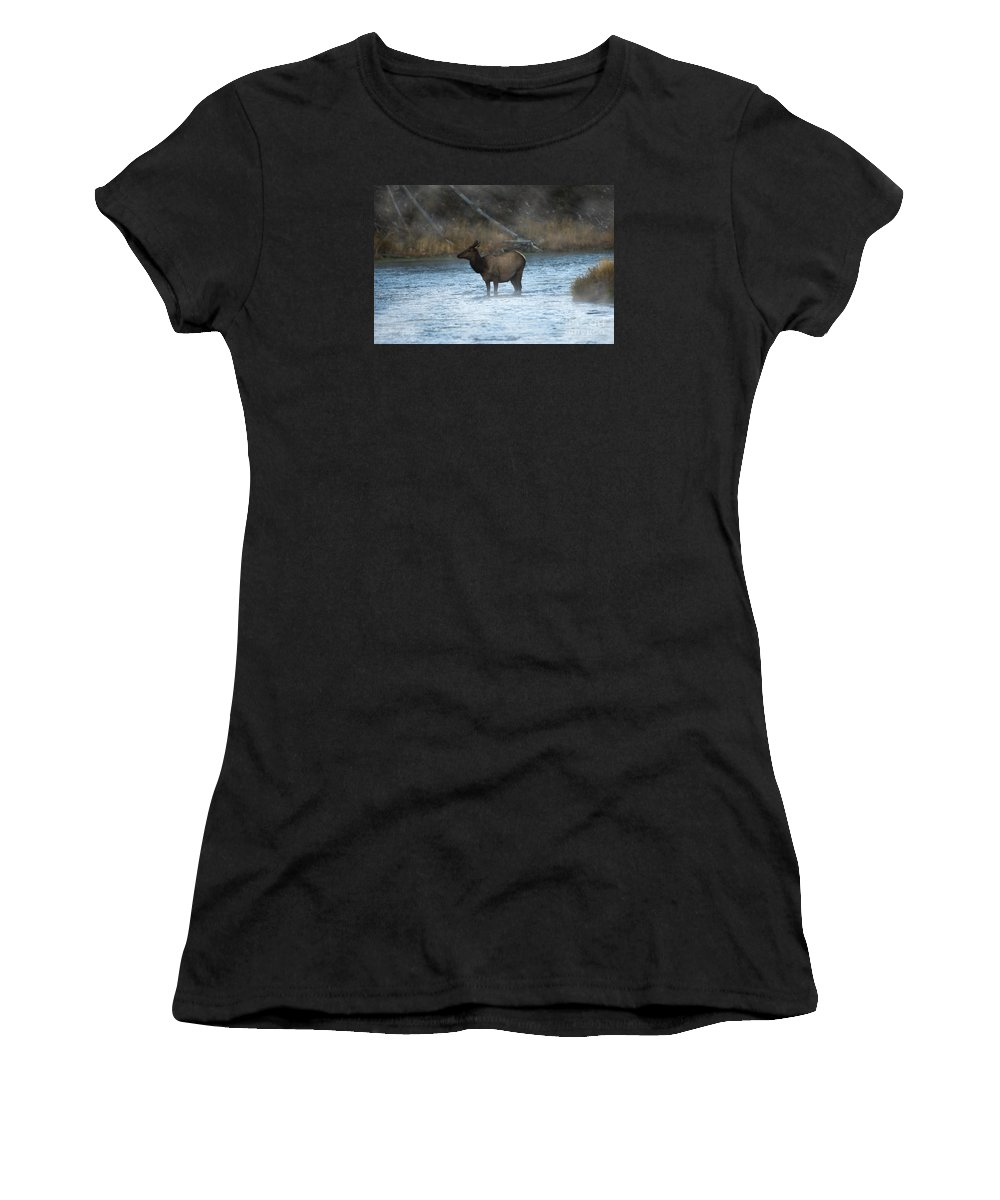 Elk Women's T-Shirt featuring the photograph Elk In Fog by Wildlife Fine Art