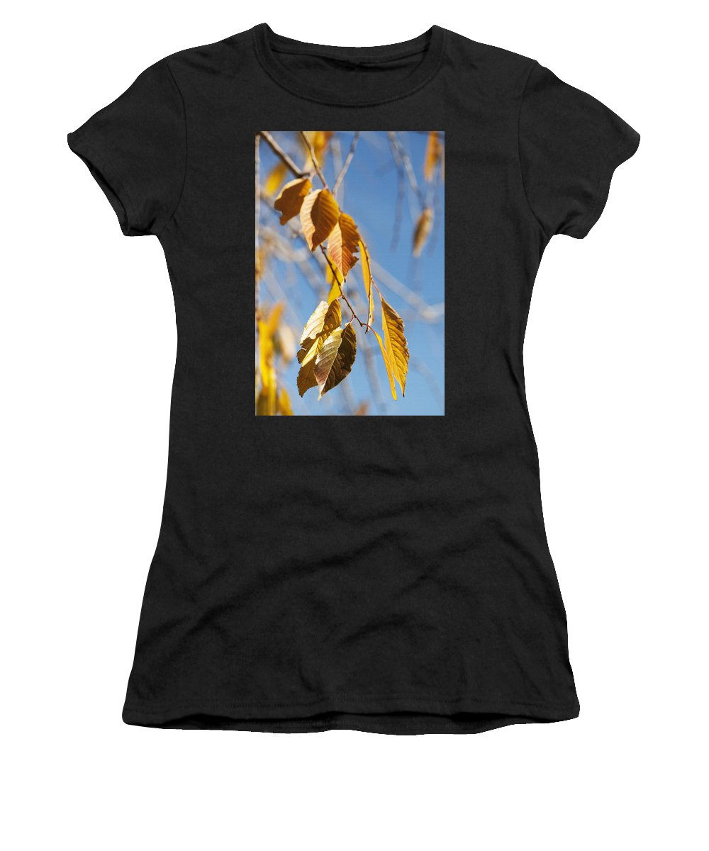 Trees Women's T-Shirt (Athletic Fit) featuring the photograph Fall Leaves Study 3 by Steve Ohlsen