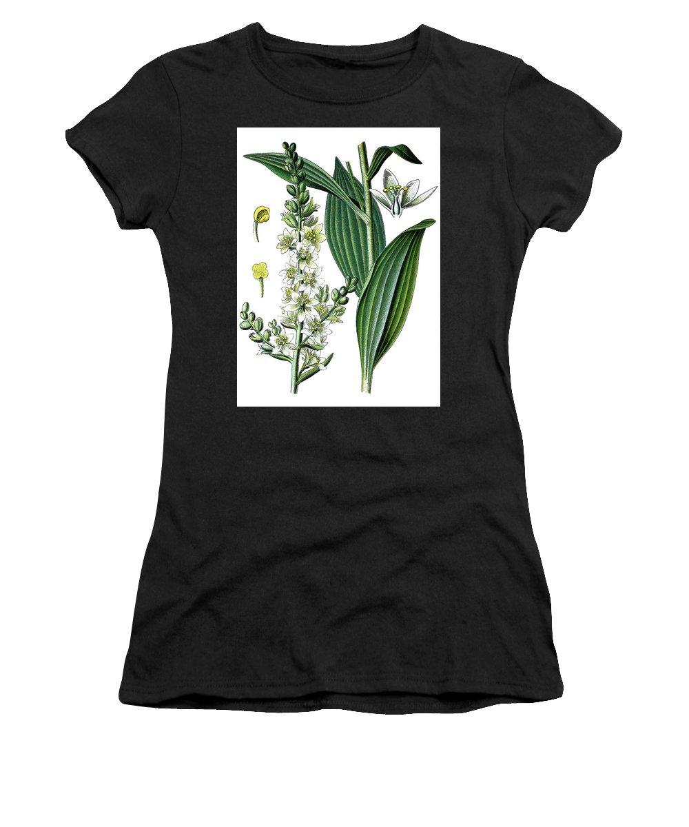 False Helleborine Women's T-Shirt (Athletic Fit) featuring the drawing false helleborine, white hellebore, European white hellebore, wh by Bildagentur-online