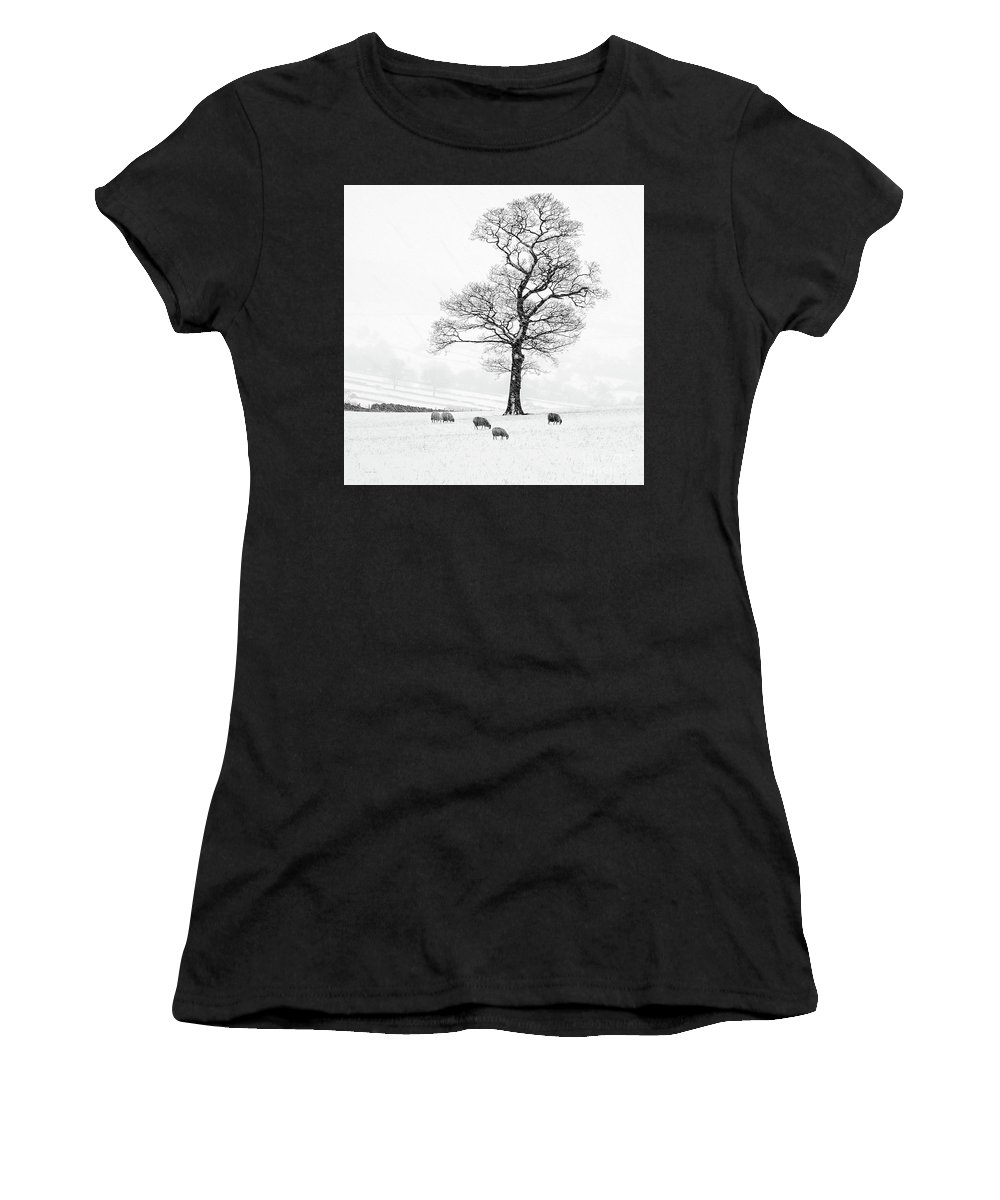 Sheep In Winter Women's T-Shirt (Athletic Fit) featuring the photograph Farndale Winter by Janet Burdon