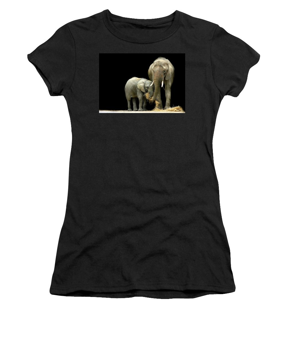 Elephant Women's T-Shirt (Athletic Fit) featuring the photograph Feeding Time by Stephie Butler