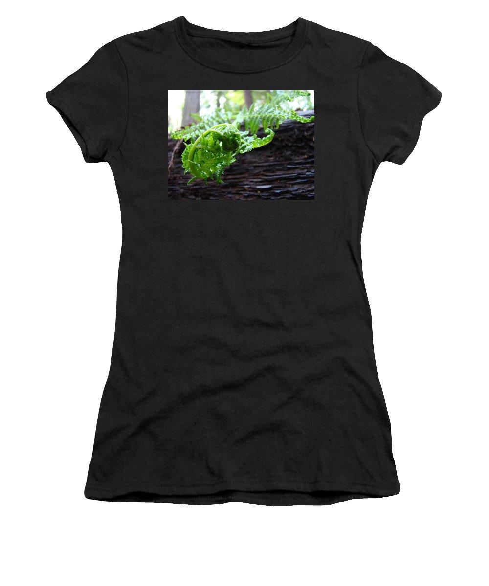 Fern Women's T-Shirt featuring the photograph Fern On Redwood Tree Art Print Baslee Troutman by Baslee Troutman