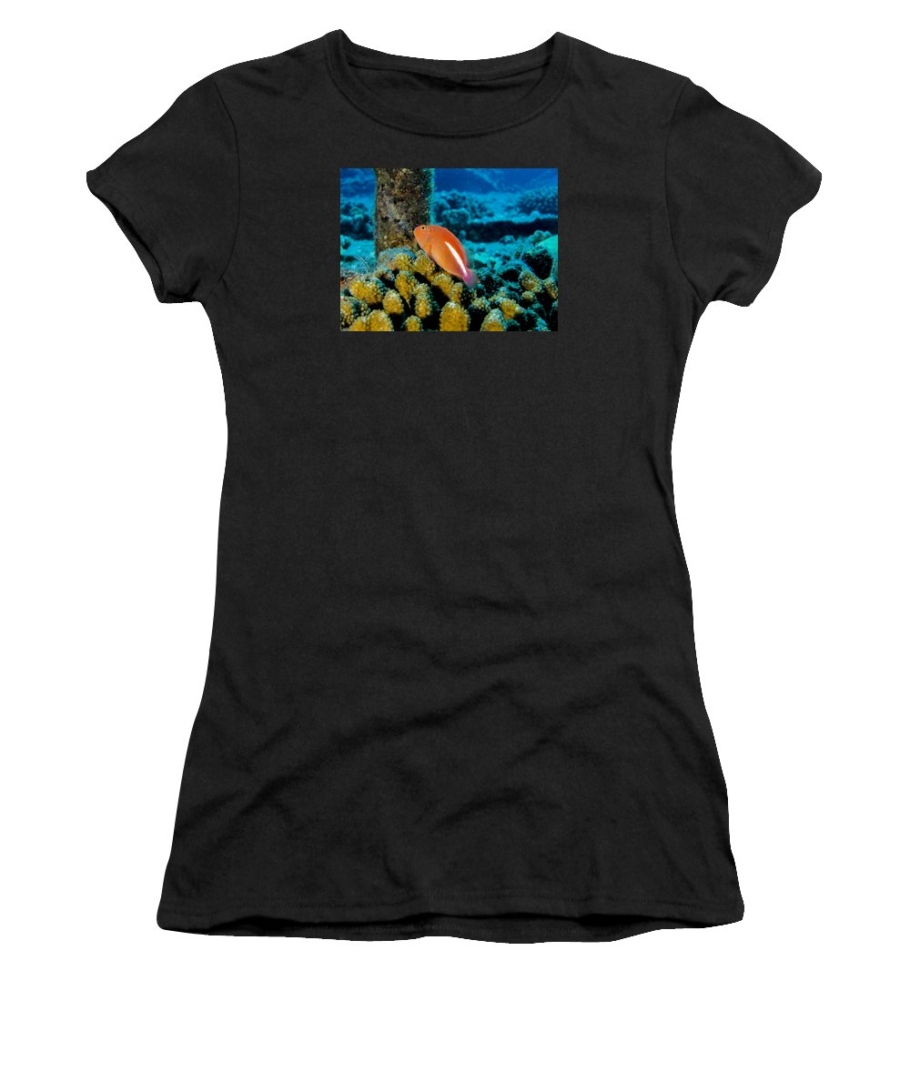 Coral Women's T-Shirt (Athletic Fit) featuring the photograph Fish On Coral by Dan Norton