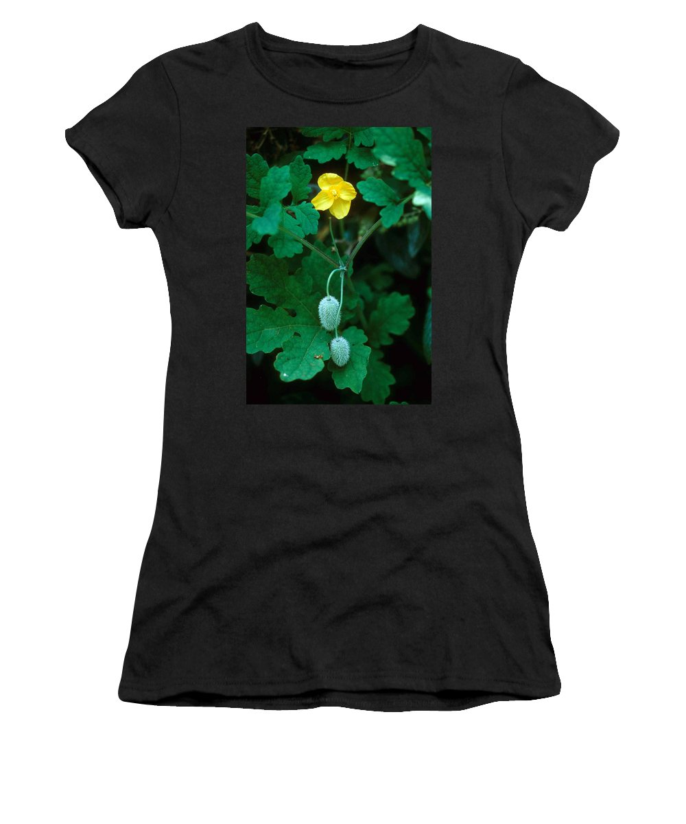 Flower Women's T-Shirt (Athletic Fit) featuring the photograph Flower And Fruit by Laurie Paci