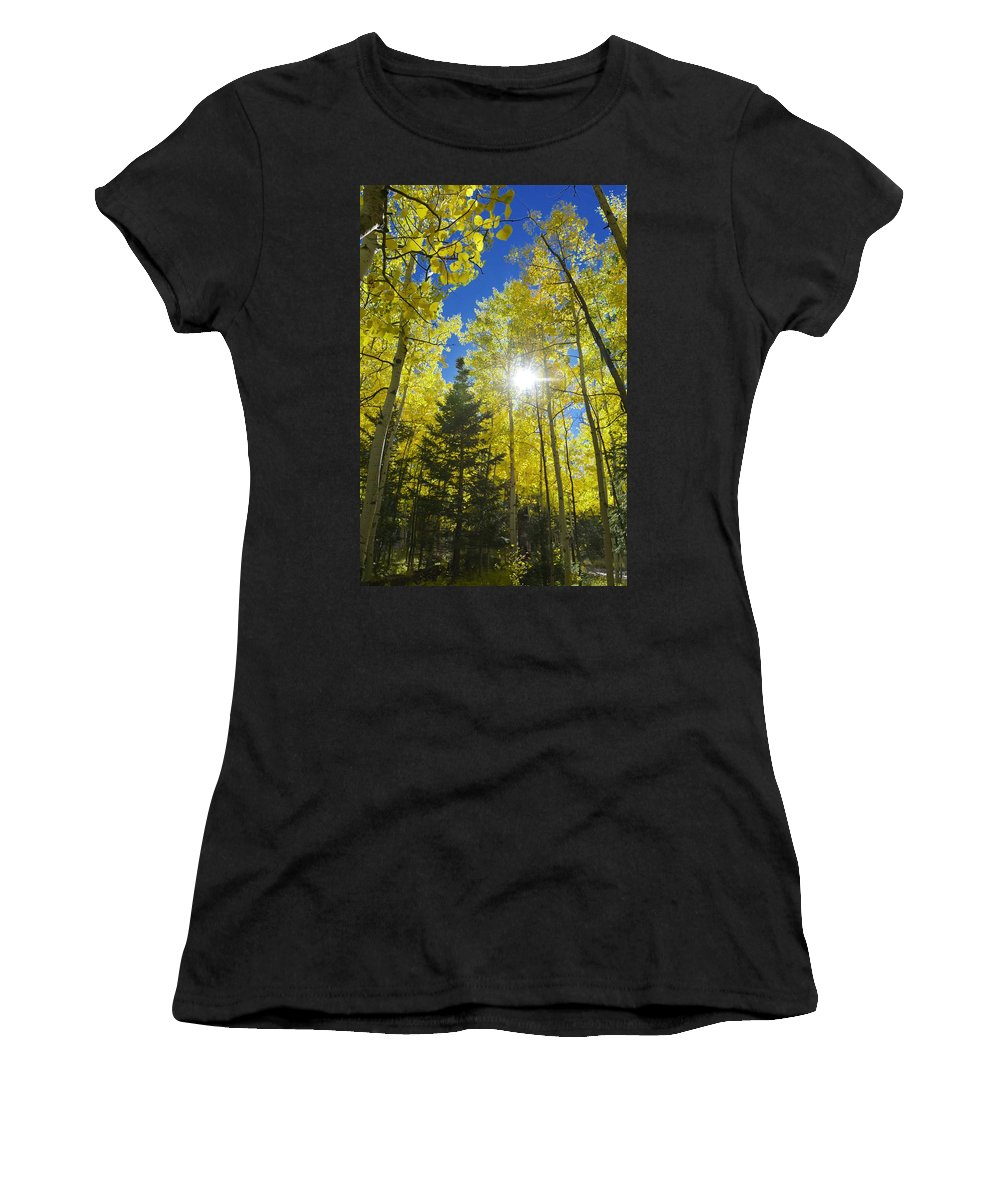 Trees Women's T-Shirt featuring the photograph Forest Sunshine by Barbara Stellwagen