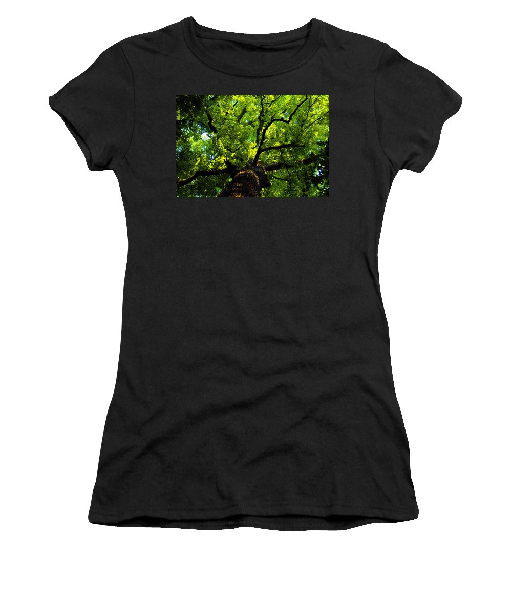 Forest Women's T-Shirt (Athletic Fit) featuring the painting Forest Top by David Lee Thompson