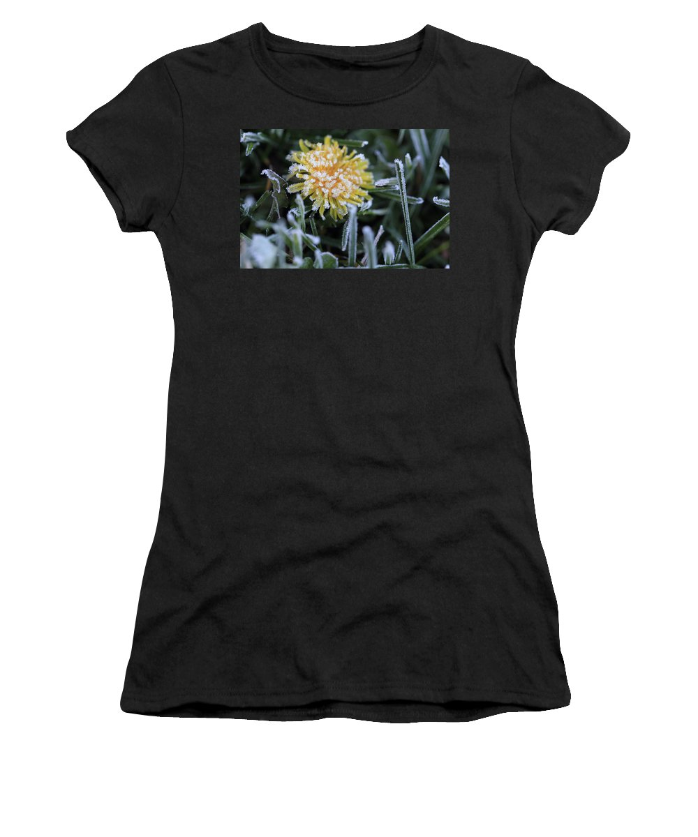 Flower Women's T-Shirt (Athletic Fit) featuring the photograph Frosted Not Glazed by Shelley Neff