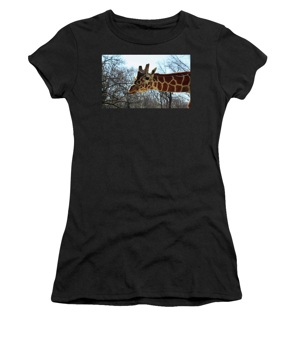 Maryland Women's T-Shirt featuring the photograph Giraffe Stretching For A View by Ronald Reid