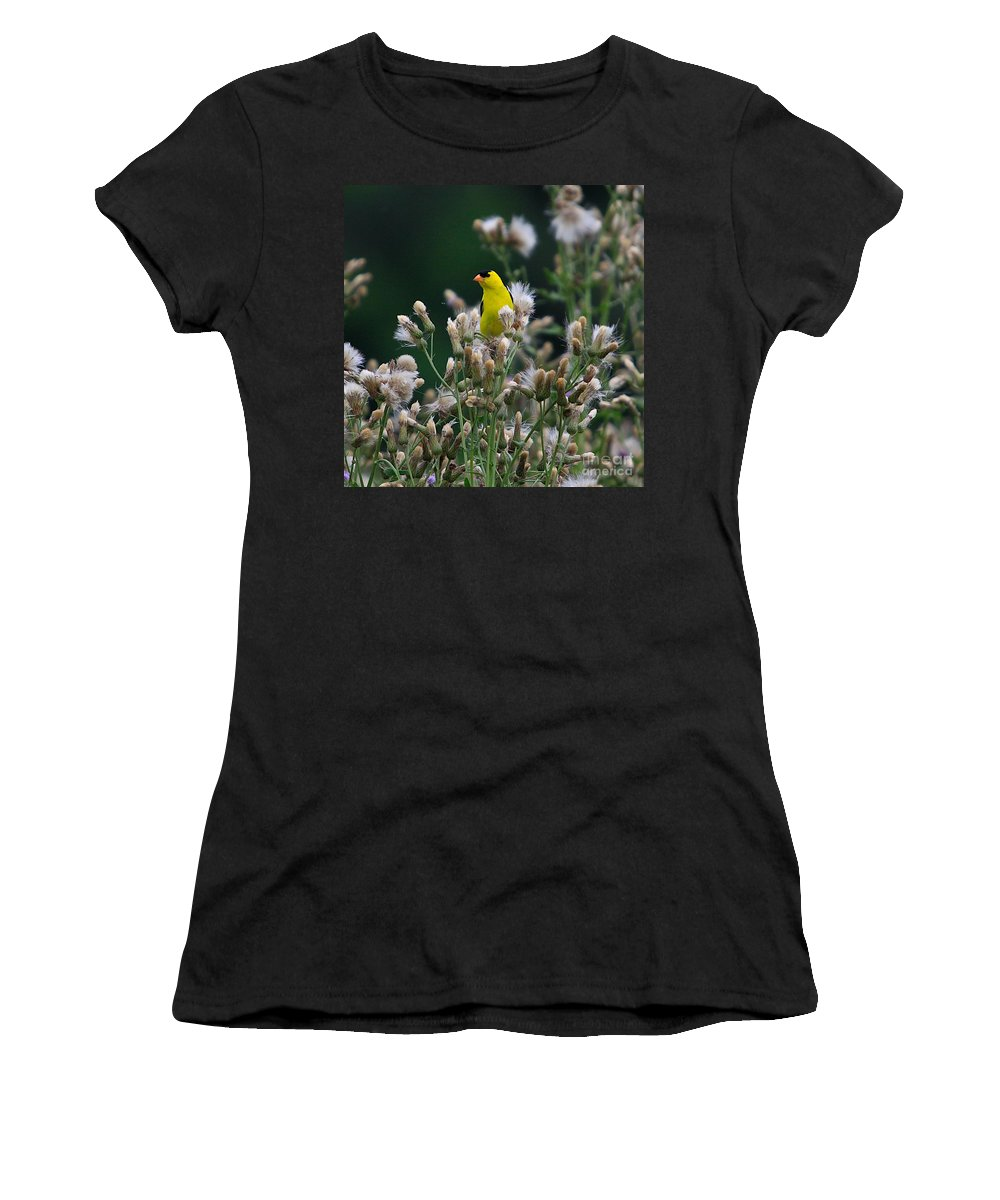 Goldfinch Women's T-Shirt (Athletic Fit) featuring the photograph Gold Finches-12 by Robert Pearson