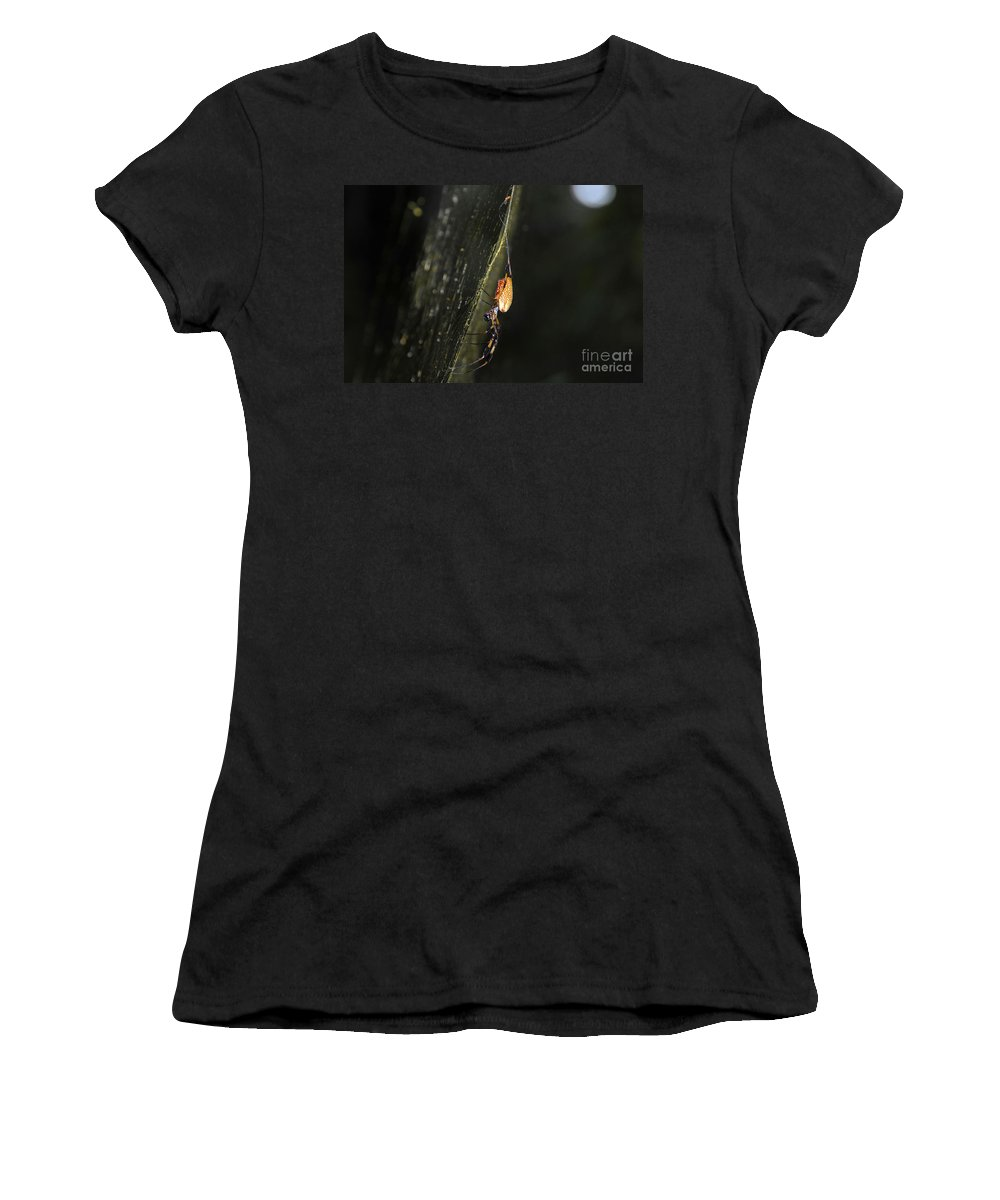 Golden Orb Spider Women's T-Shirt featuring the photograph Golden Orb Spider by David Lee Thompson