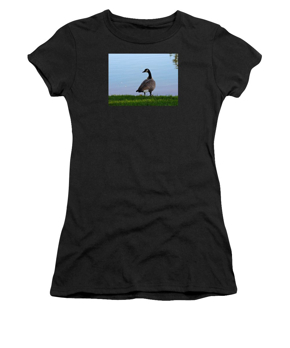 Goose Women's T-Shirt (Athletic Fit) featuring the photograph Goose #2 Pose by Roberts Photography