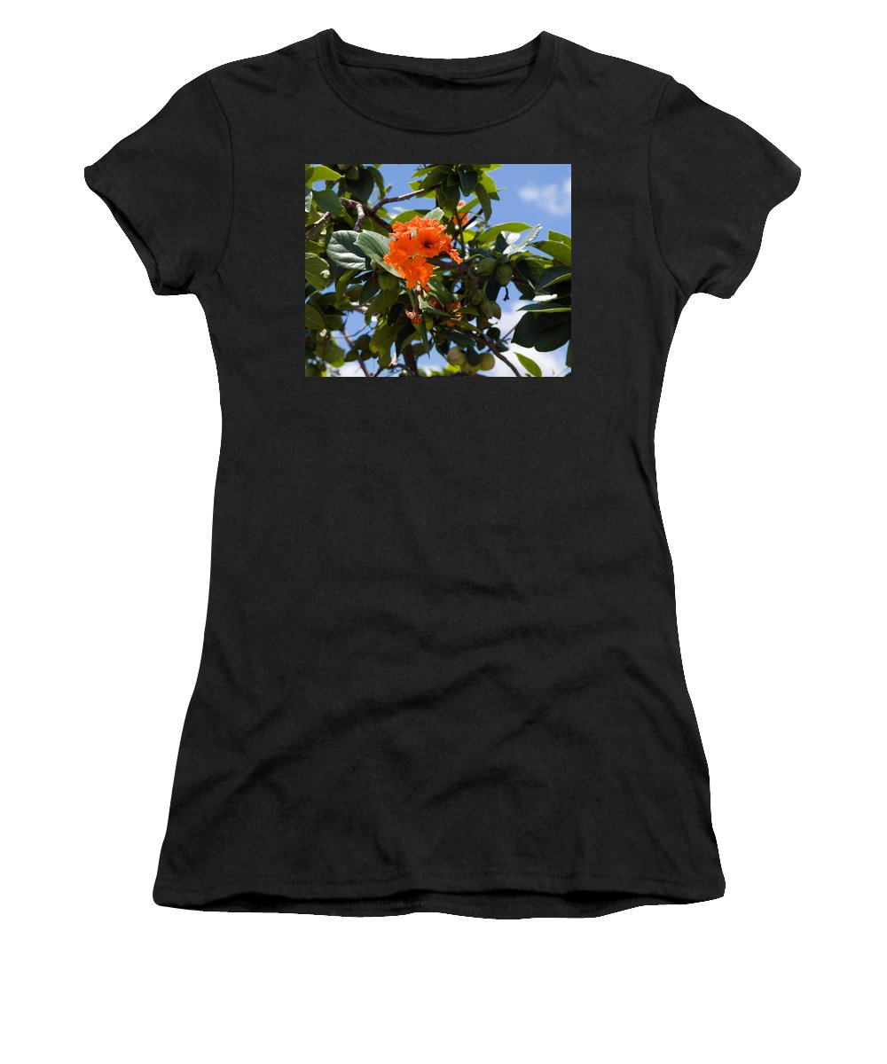 Hibiscus; Rosasinensis; Rosa; Sinensis; Rosa-sinensis; Tree; Bush; Shrub; Plant; Flower; Flowers; Fl Women's T-Shirt (Athletic Fit) featuring the photograph Hibiscus Rosasinensis With Fruit On The Indian River by Allan Hughes