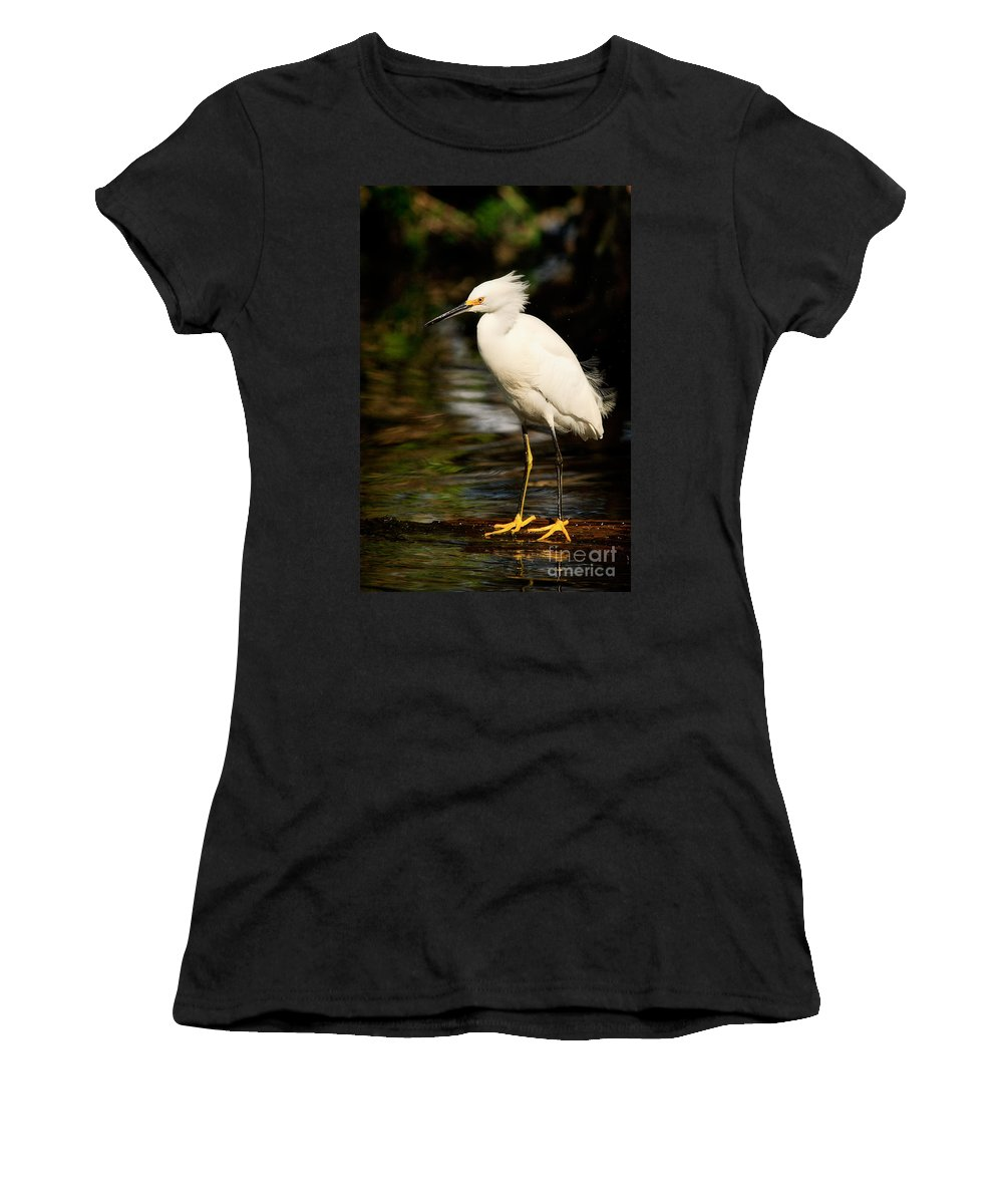 Immature Snowy Egret Women's T-Shirt (Athletic Fit) featuring the photograph Immature Snowy Egret by Matt Suess
