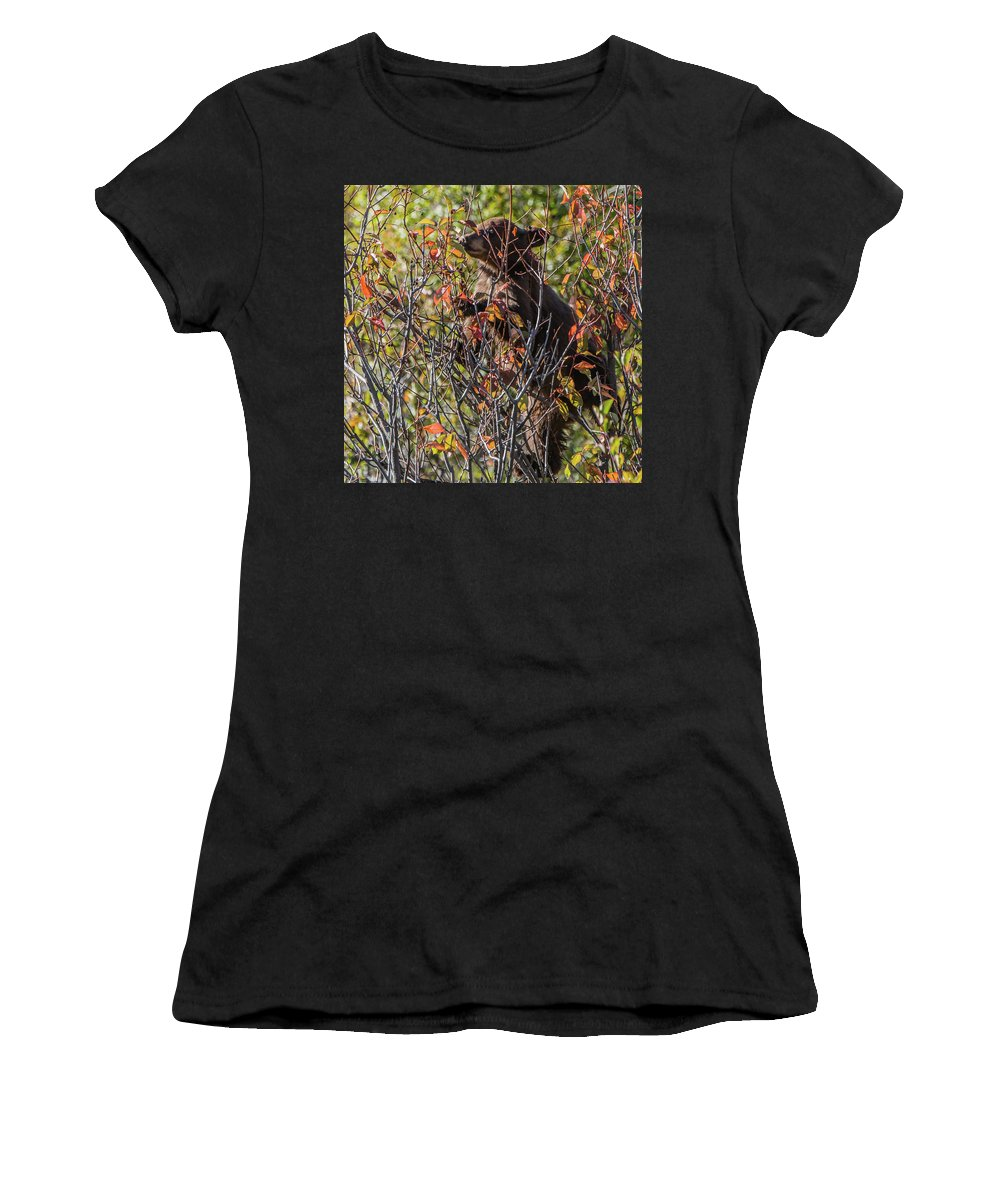 Black Bear Cub Women's T-Shirt (Athletic Fit) featuring the photograph Just Looking For Berries by Yeates Photography