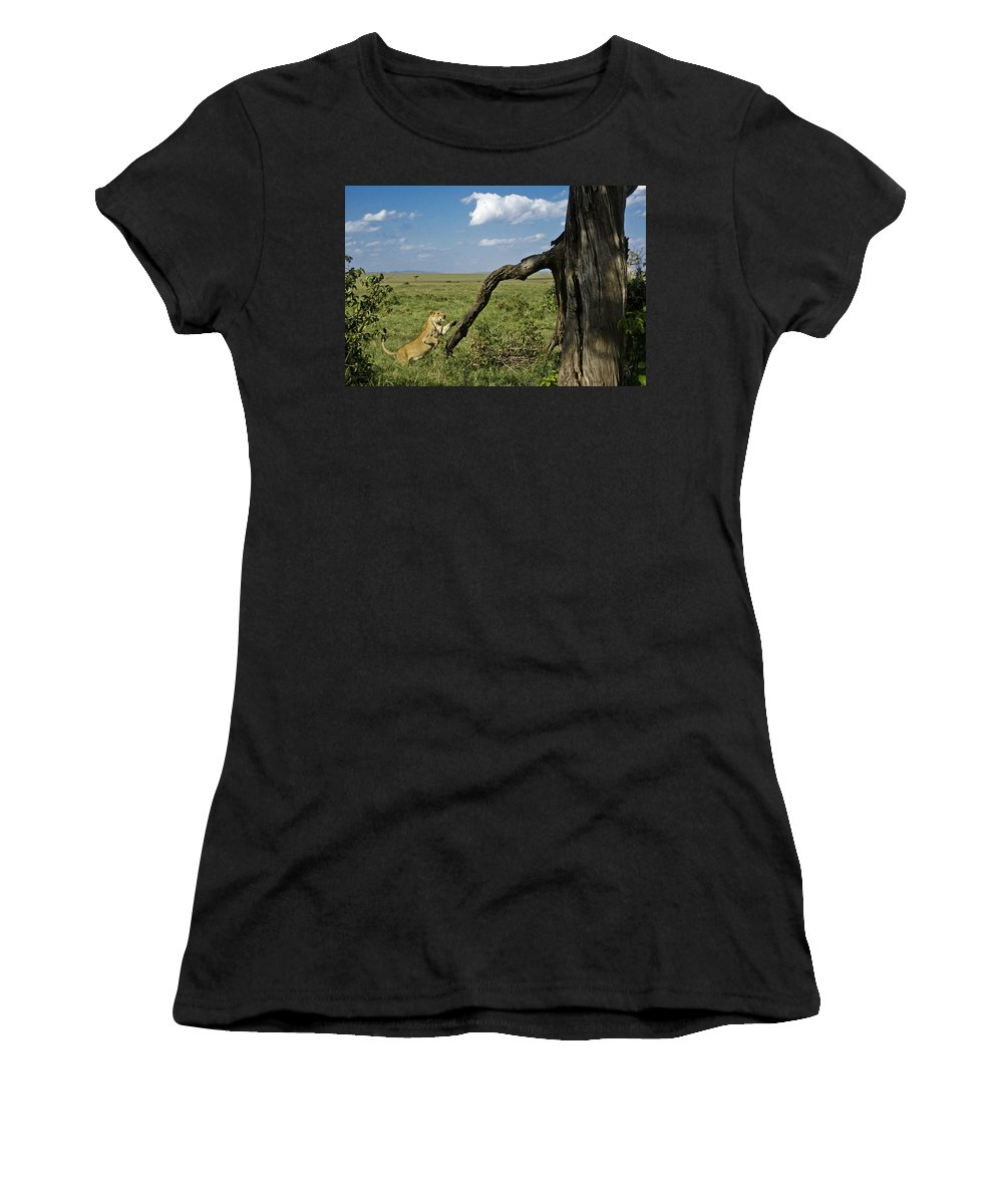 Africa Women's T-Shirt (Athletic Fit) featuring the photograph Leaping Lion by Michele Burgess