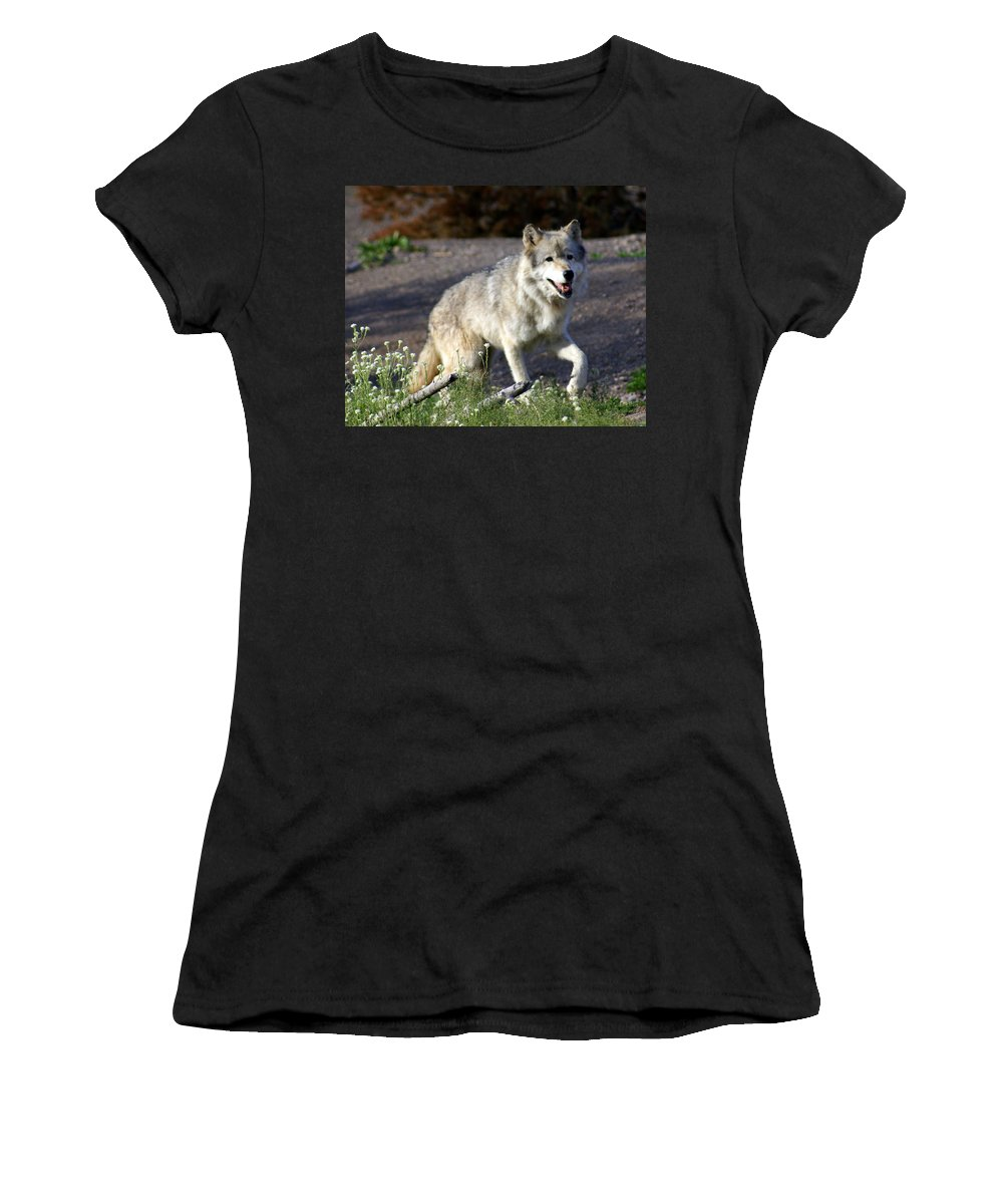 Wildlife Women's T-Shirt (Athletic Fit) featuring the photograph Lonly Wolf by Marty Koch