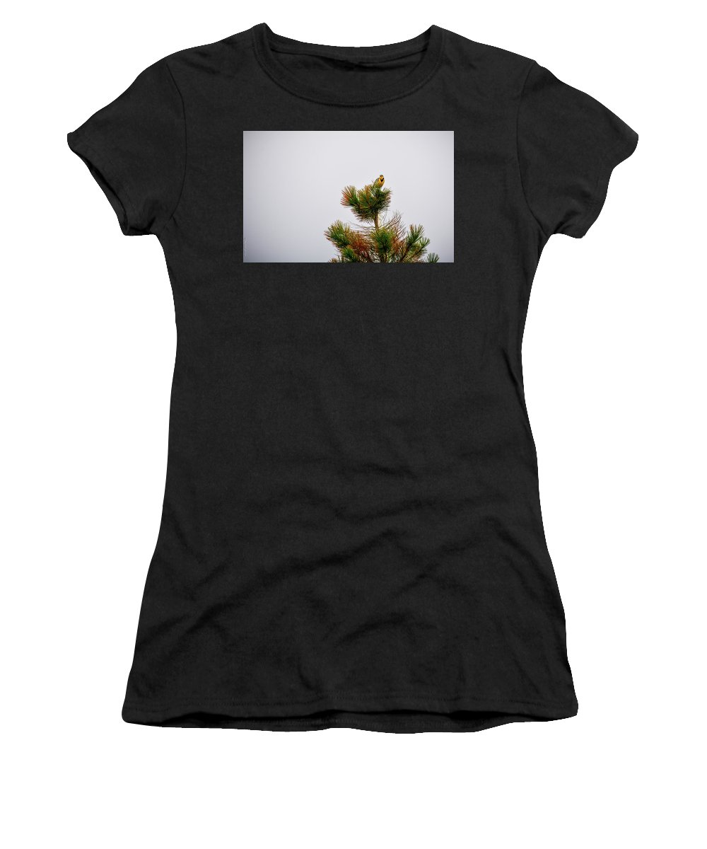 South Dakota Women's T-Shirt (Athletic Fit) featuring the photograph Meadowlark - 1 by M Dale
