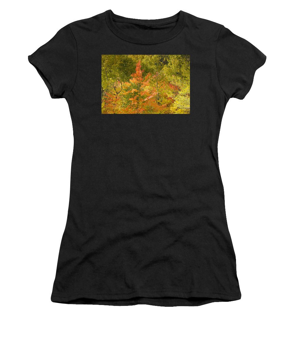 Tree Women's T-Shirt (Athletic Fit) featuring the photograph Mixed Autumn by Phill Doherty