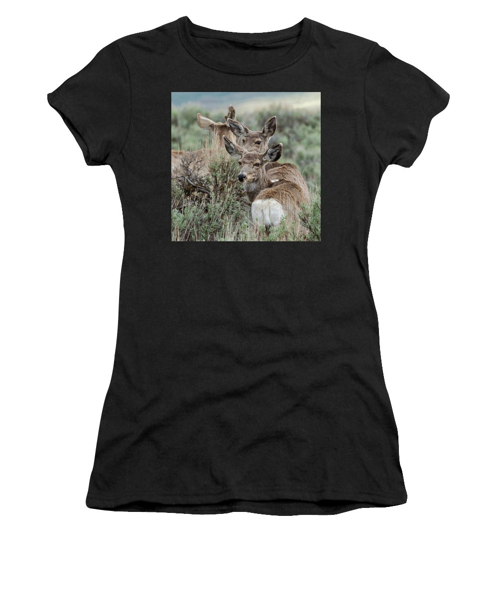 Mule Deer Women's T-Shirt (Athletic Fit) featuring the photograph Montana Mule Deer On A Spring Night by Yeates Photography