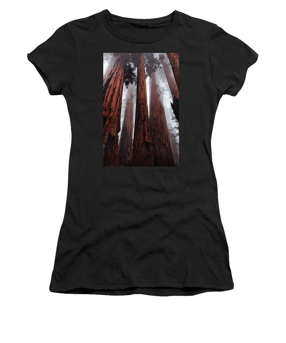 Nature Women's T-Shirt featuring the painting Morning Fog In Redwood Forest by Elaine Plesser