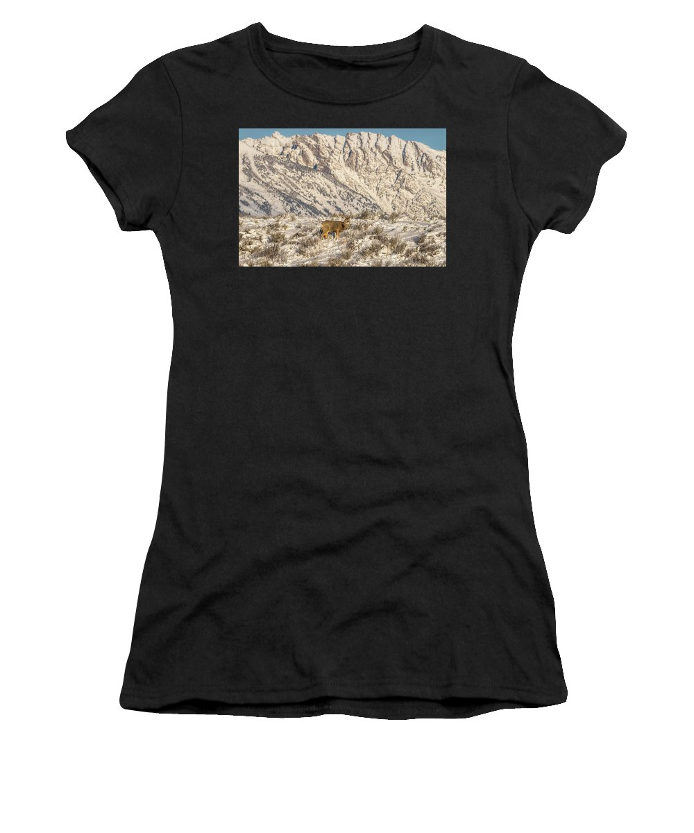 Mule Deer Women's T-Shirt featuring the photograph Mule Deer Buck In Winter Sun by Yeates Photography