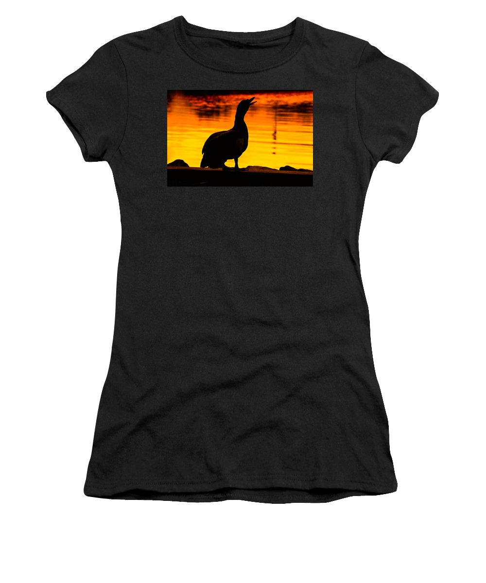 Duck Women's T-Shirt featuring the photograph Muscovy Sunset by Rich Leighton