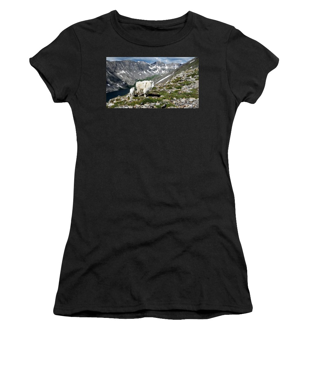 Nanny Kid Mountain Goat Mountaingoat Mt Mt. Mount Quandary Landscape Colorado Women's T-Shirt (Athletic Fit) featuring the photograph Here's Looking At You by Carl Paulson
