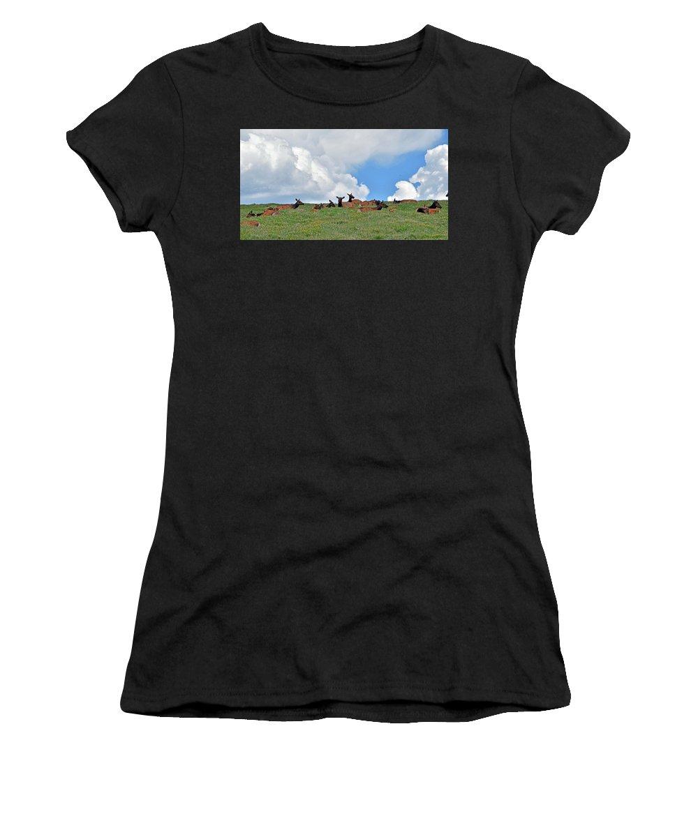 Elk Women's T-Shirt featuring the photograph Nap Time 2 by Linda Benoit