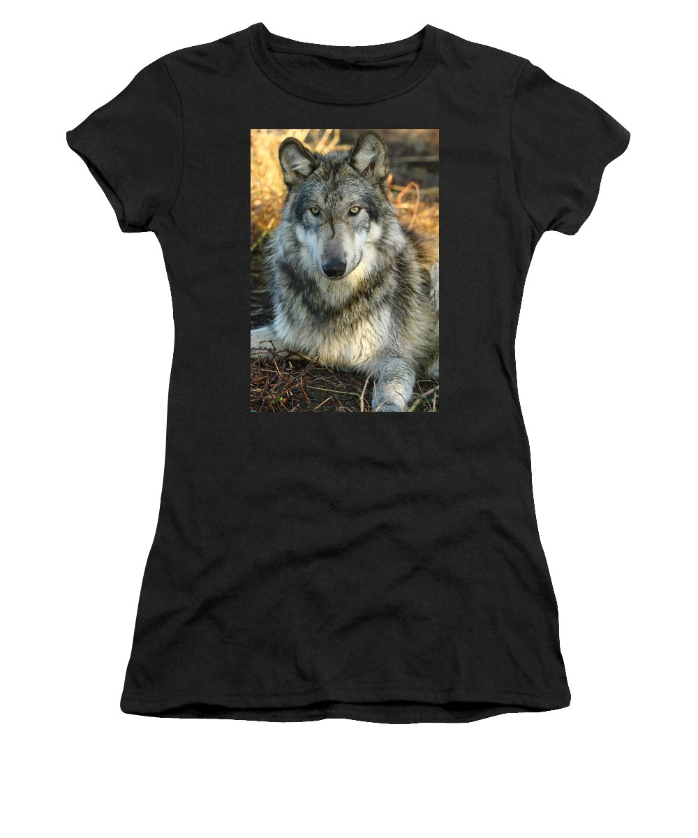 Wolf Lupine Canis Lupus Animal Wildlife Photography Photograph Women's T-Shirt (Athletic Fit) featuring the photograph Noble Lupine by Shari Jardina