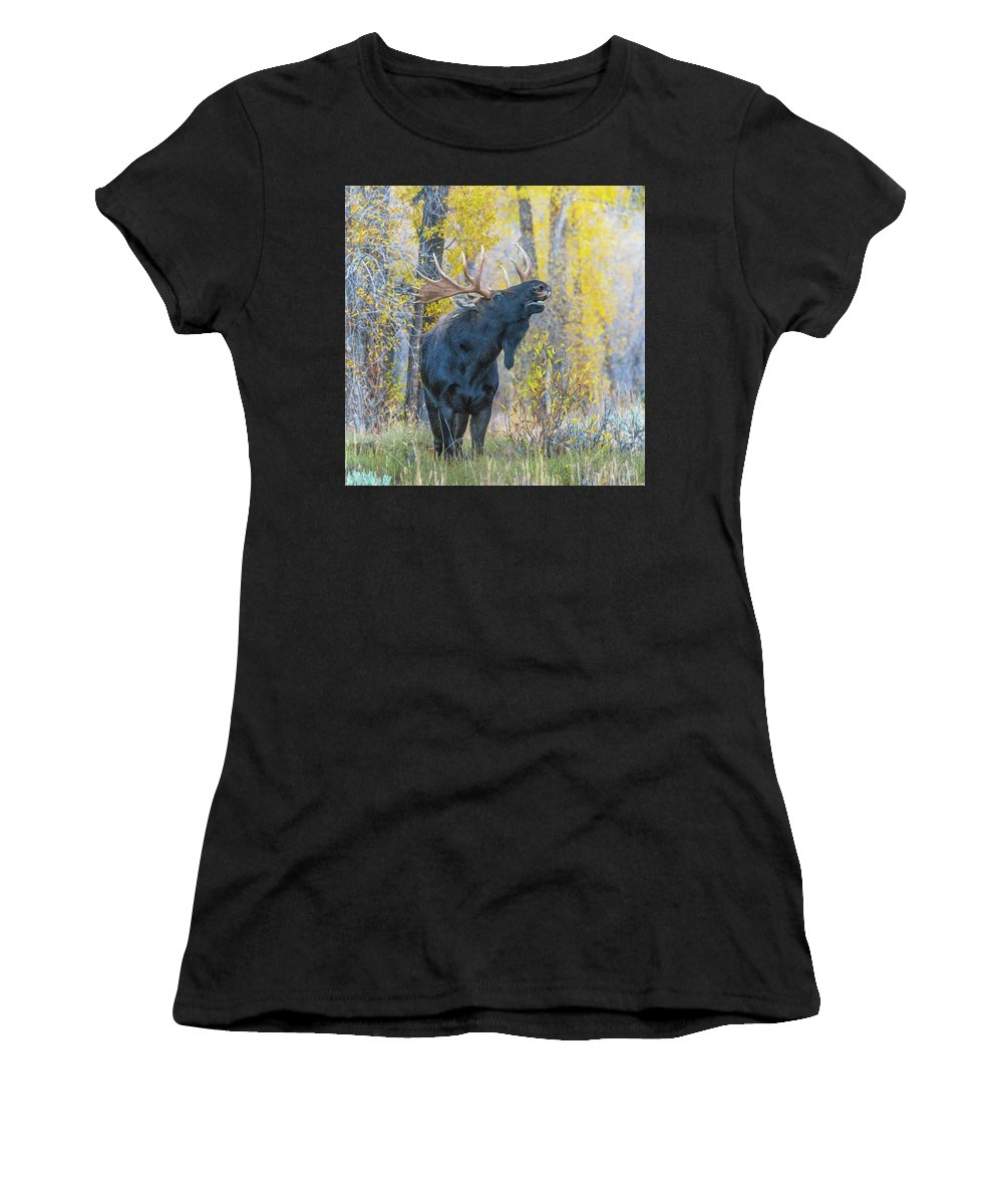 Proud Women's T-Shirt (Athletic Fit) featuring the photograph One Proud Bull Moose by Yeates Photography
