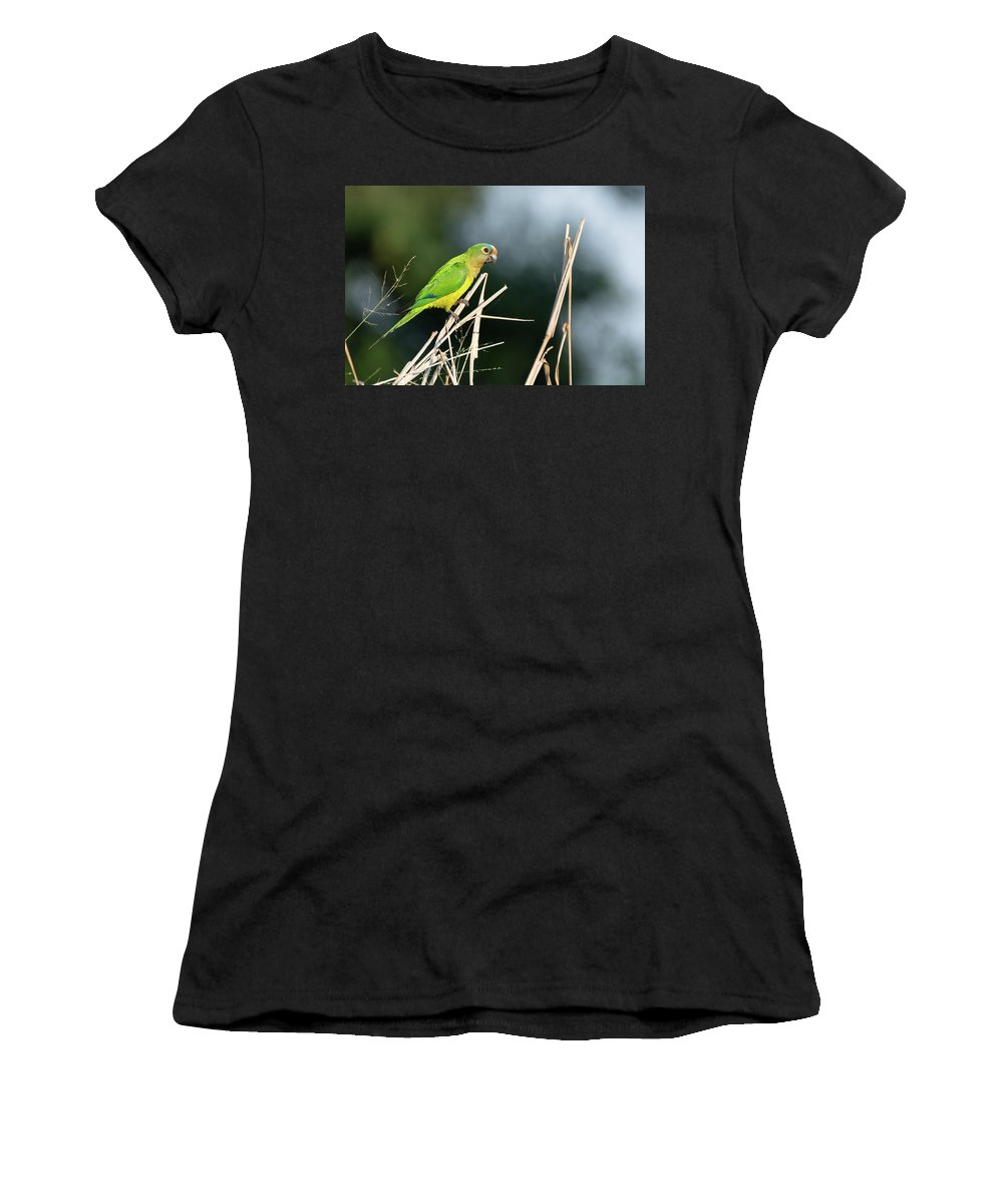 Brazil Women's T-Shirt (Athletic Fit) featuring the photograph Orange-fronted Parakeet by Mike Timmons