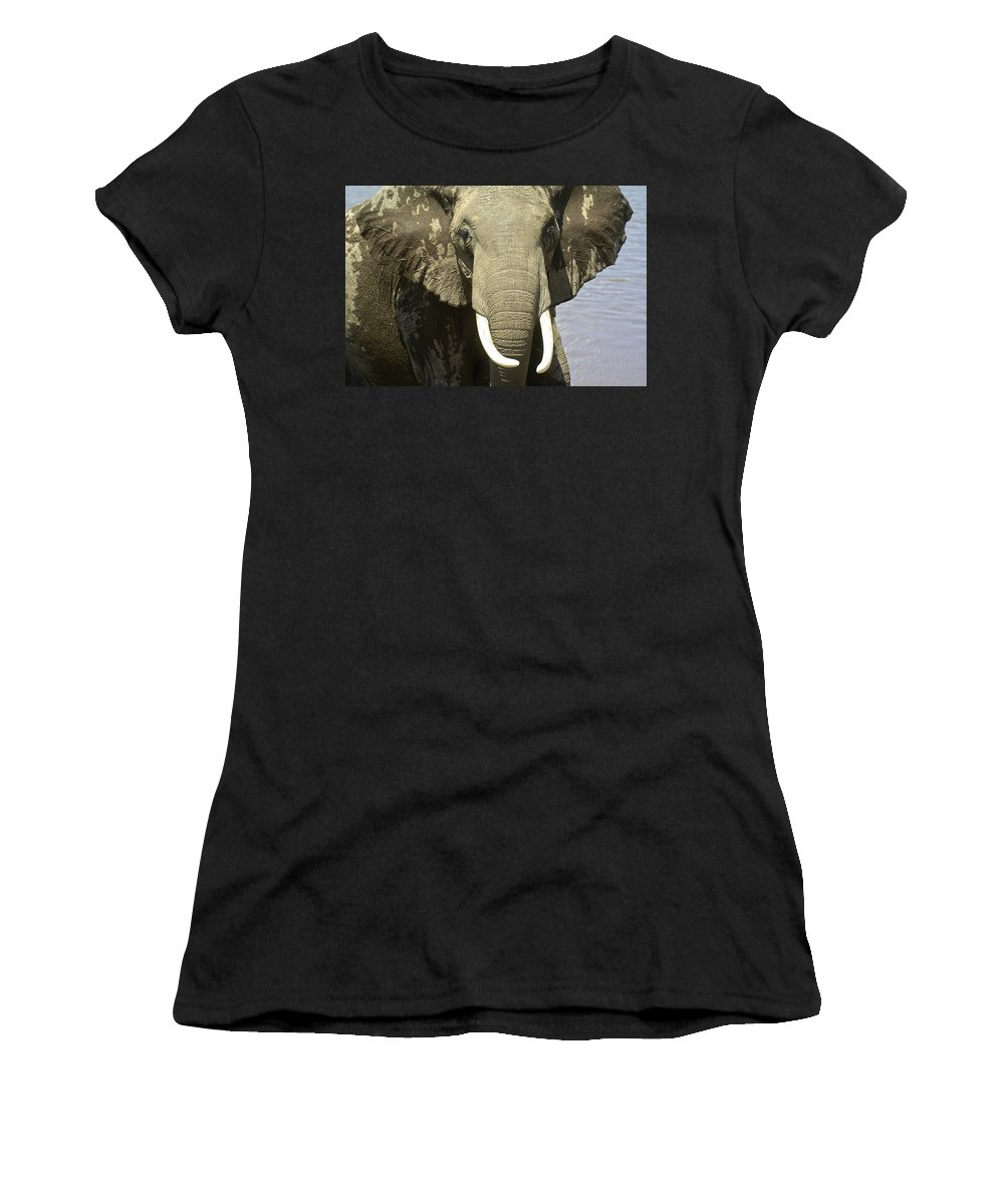 Africa Women's T-Shirt (Athletic Fit) featuring the photograph Outta My Way by Michele Burgess