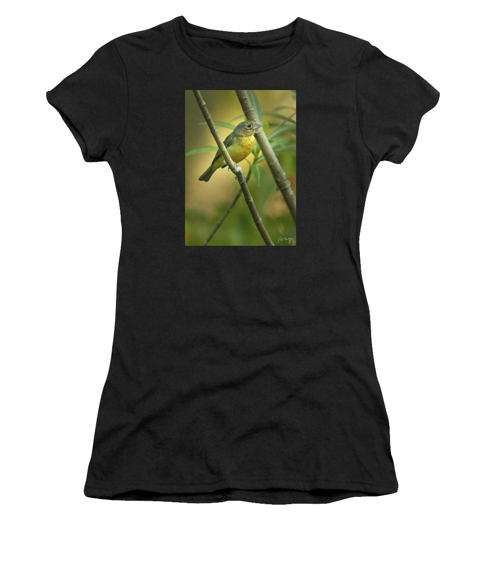 Bird Women's T-Shirt (Athletic Fit) featuring the photograph Painted Bunting Female by Phill Doherty