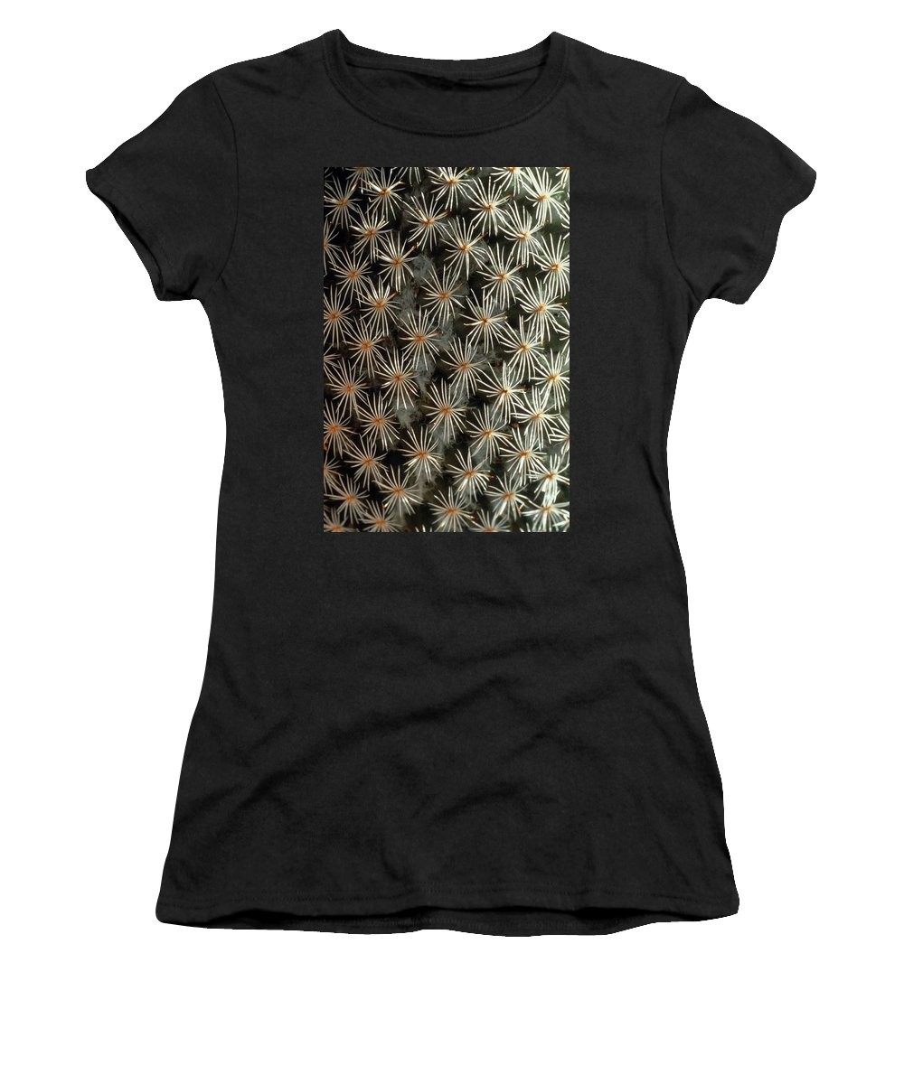 Cactus Women's T-Shirt (Athletic Fit) featuring the photograph Patterns In Light And Dark by Laurie Paci