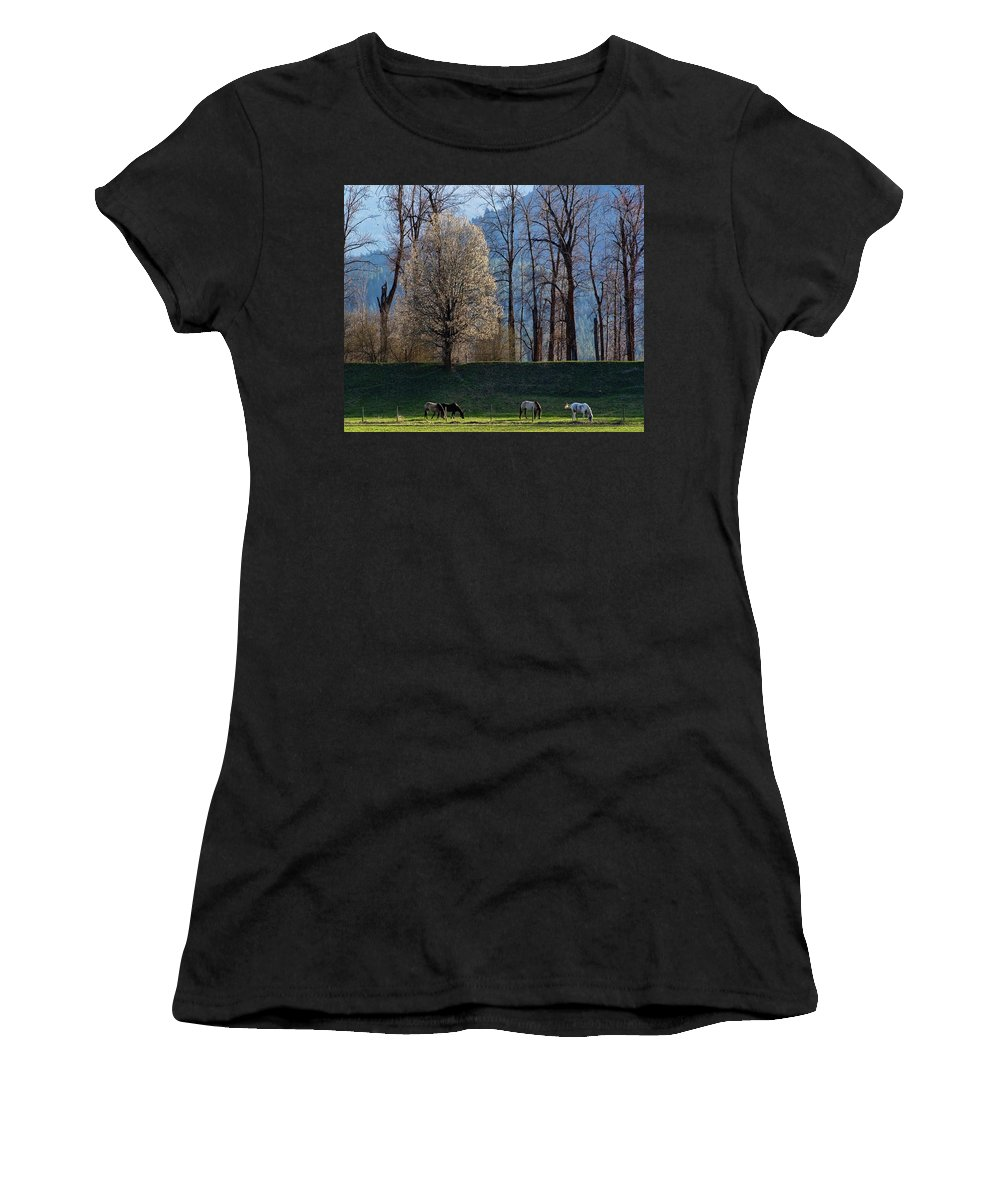 Horse Women's T-Shirt (Athletic Fit) featuring the photograph Peace by Monte Arnold
