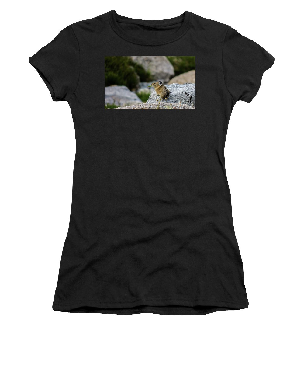 Animal Women's T-Shirt (Athletic Fit) featuring the photograph Pika Eating by Grant Bolei