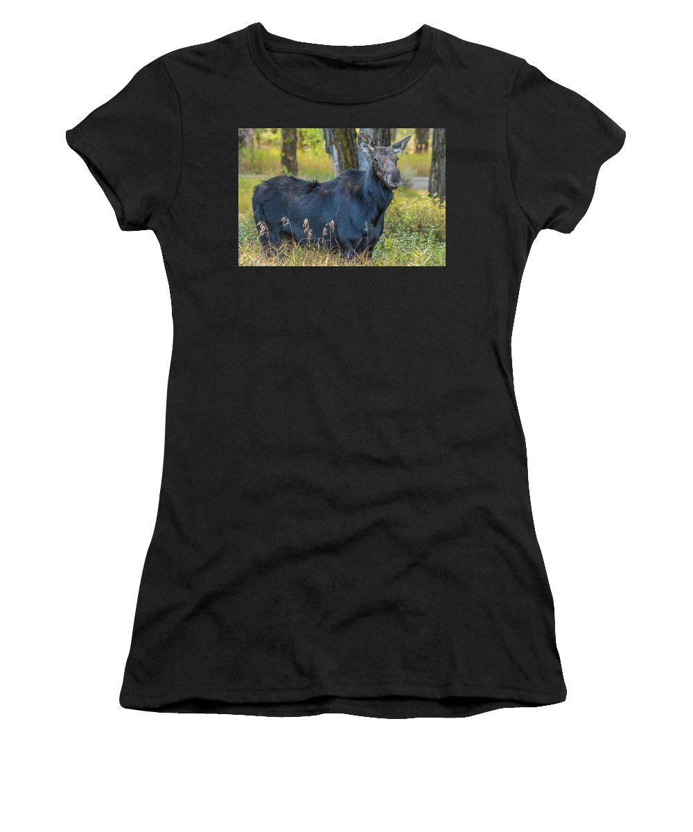 Moose Women's T-Shirt (Athletic Fit) featuring the photograph Proud Mama Moose by Yeates Photography