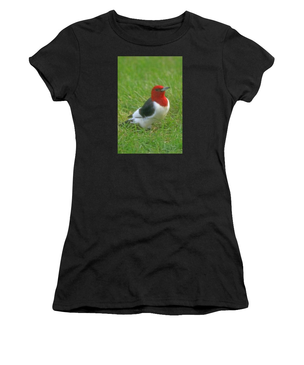 Bird Women's T-Shirt (Athletic Fit) featuring the photograph Red Headed Woodpecker by Pete Fisk